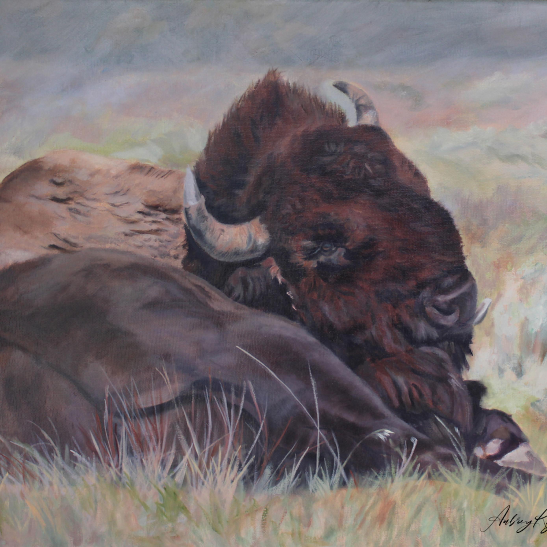 Lazy buffalo day jpupyc