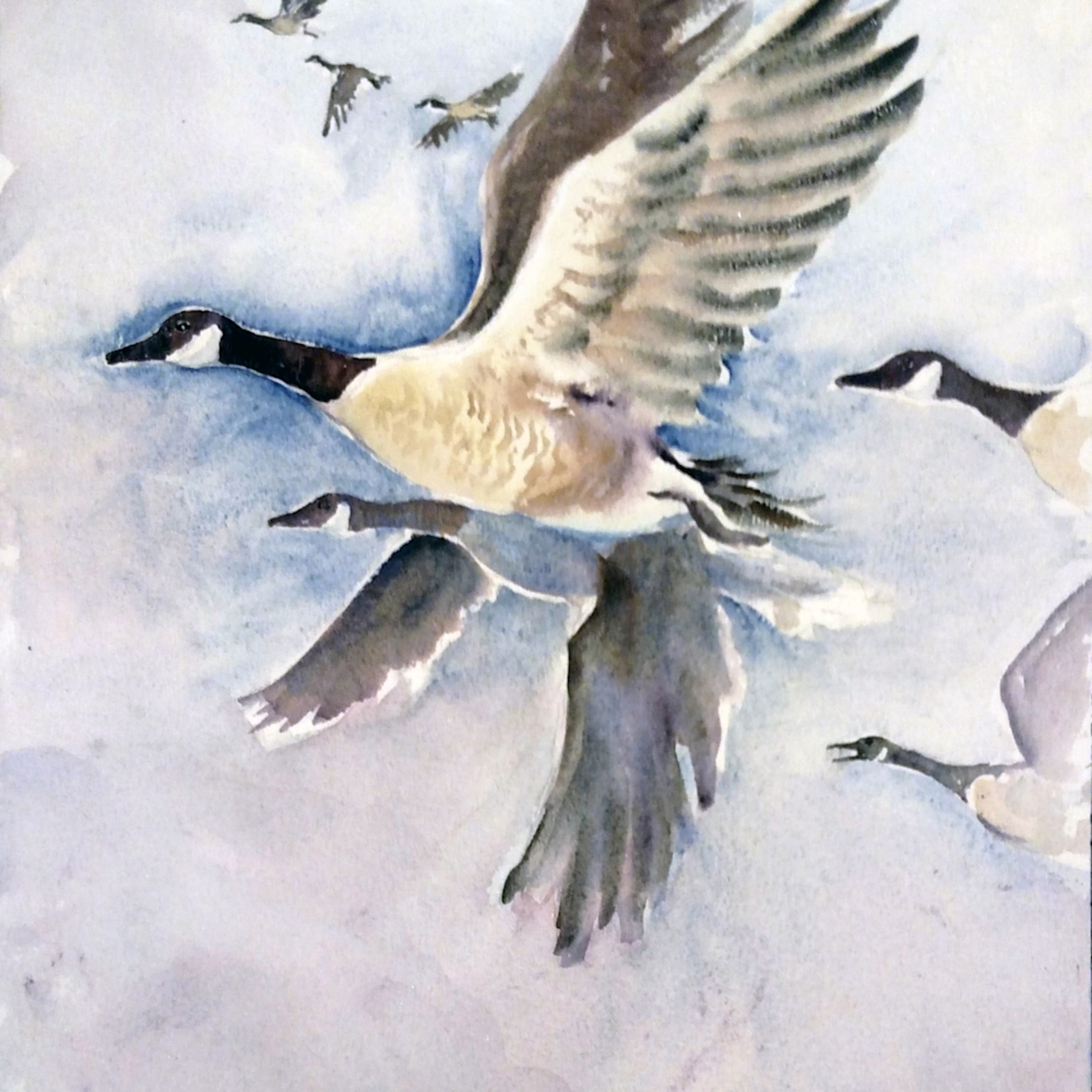 Flying geese de5juj