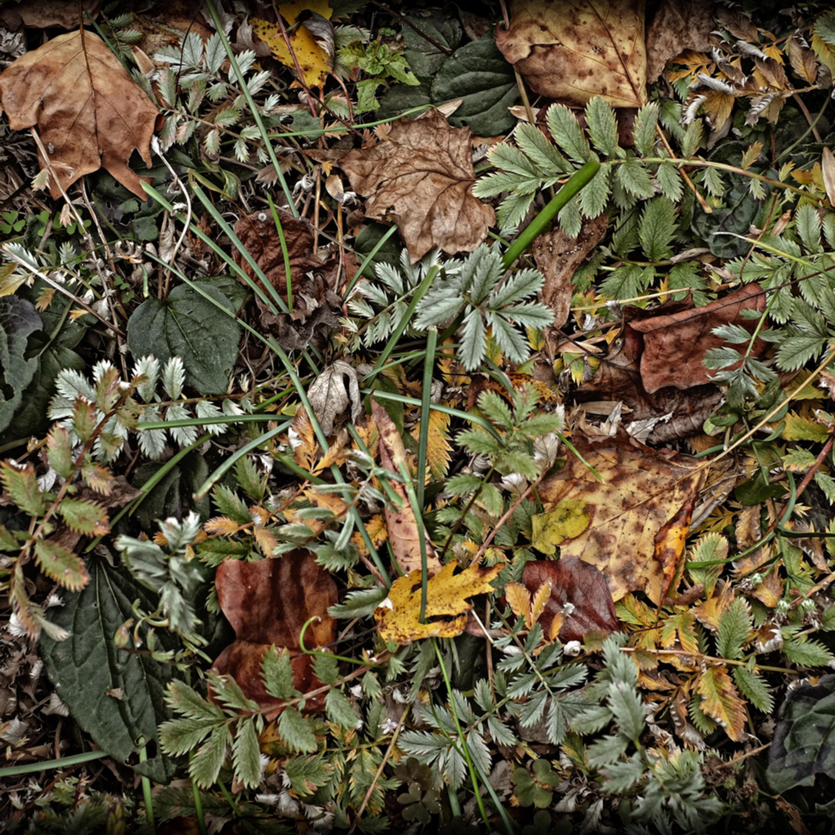 End of the season garden  msow0s