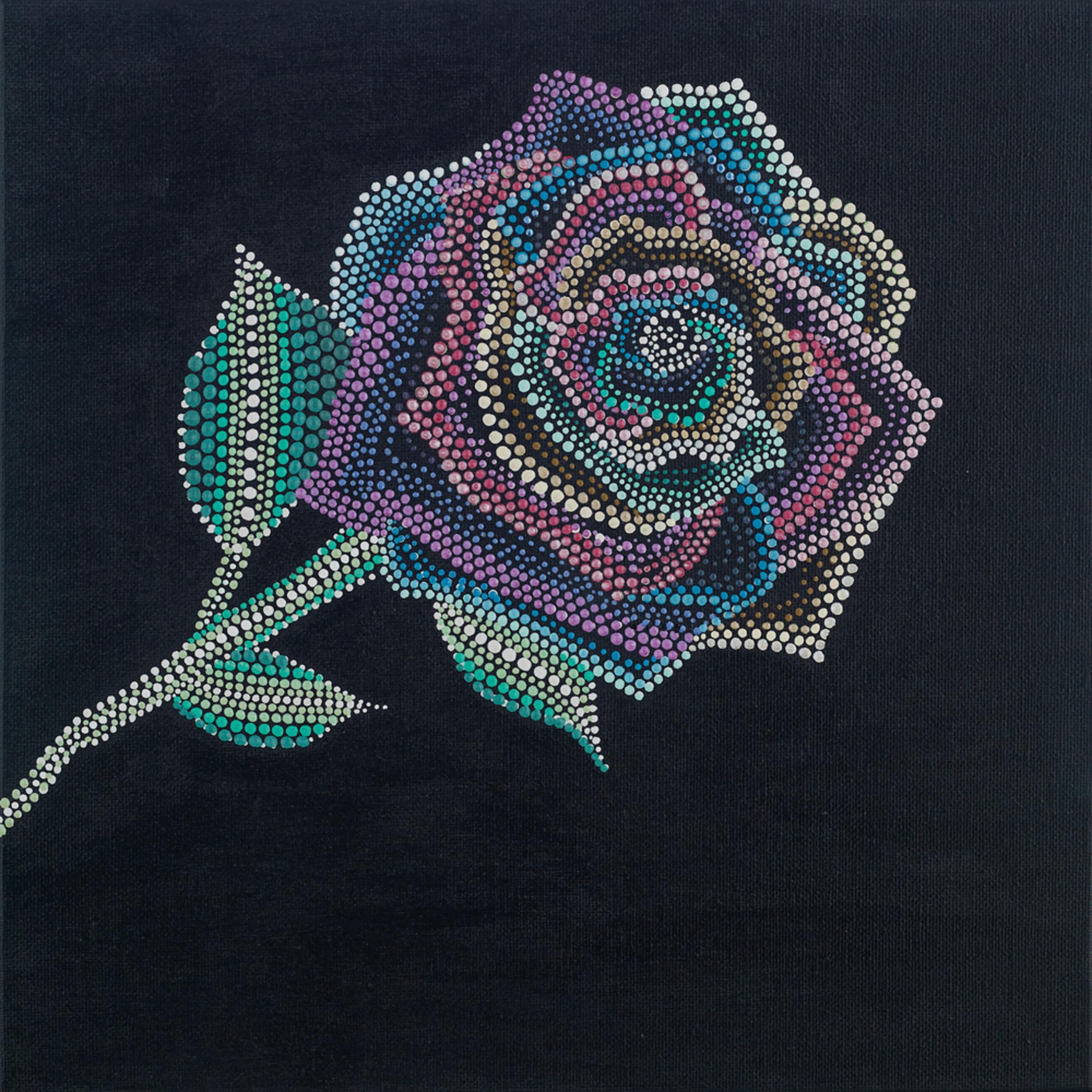 Rainbow rose uh7rtj