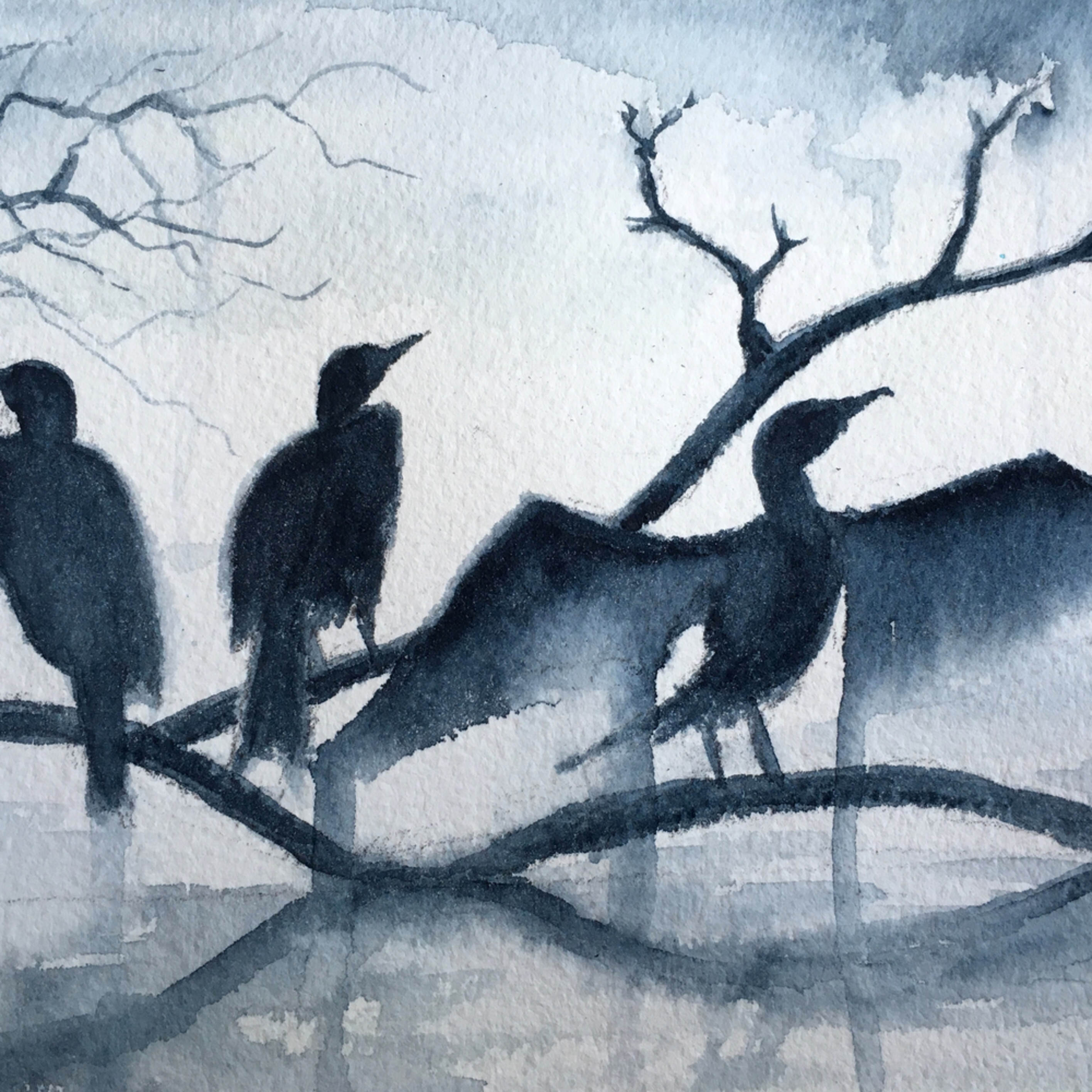Cormorants im2cbb