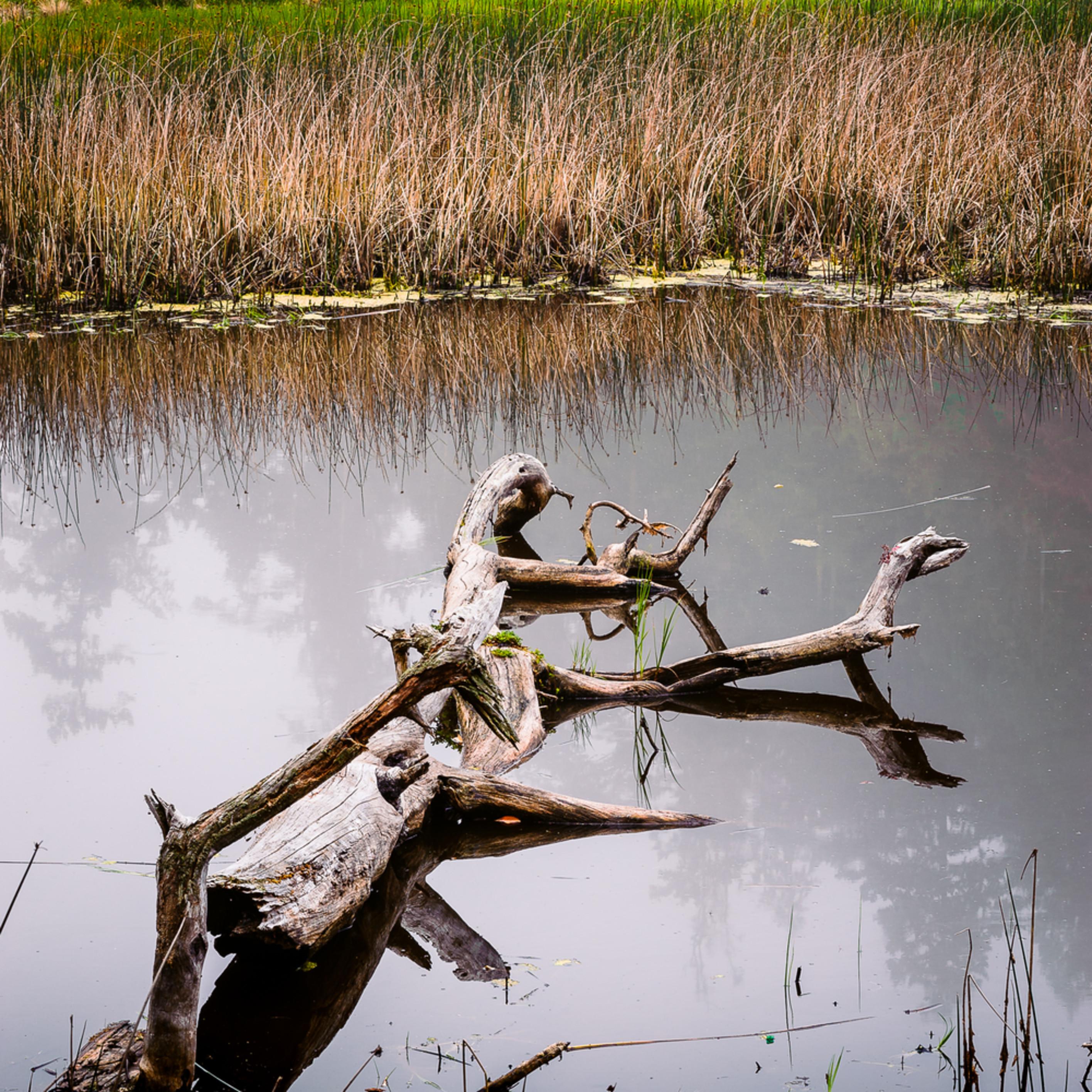 Wetlands deception pass state park washington 2016 gwumvr