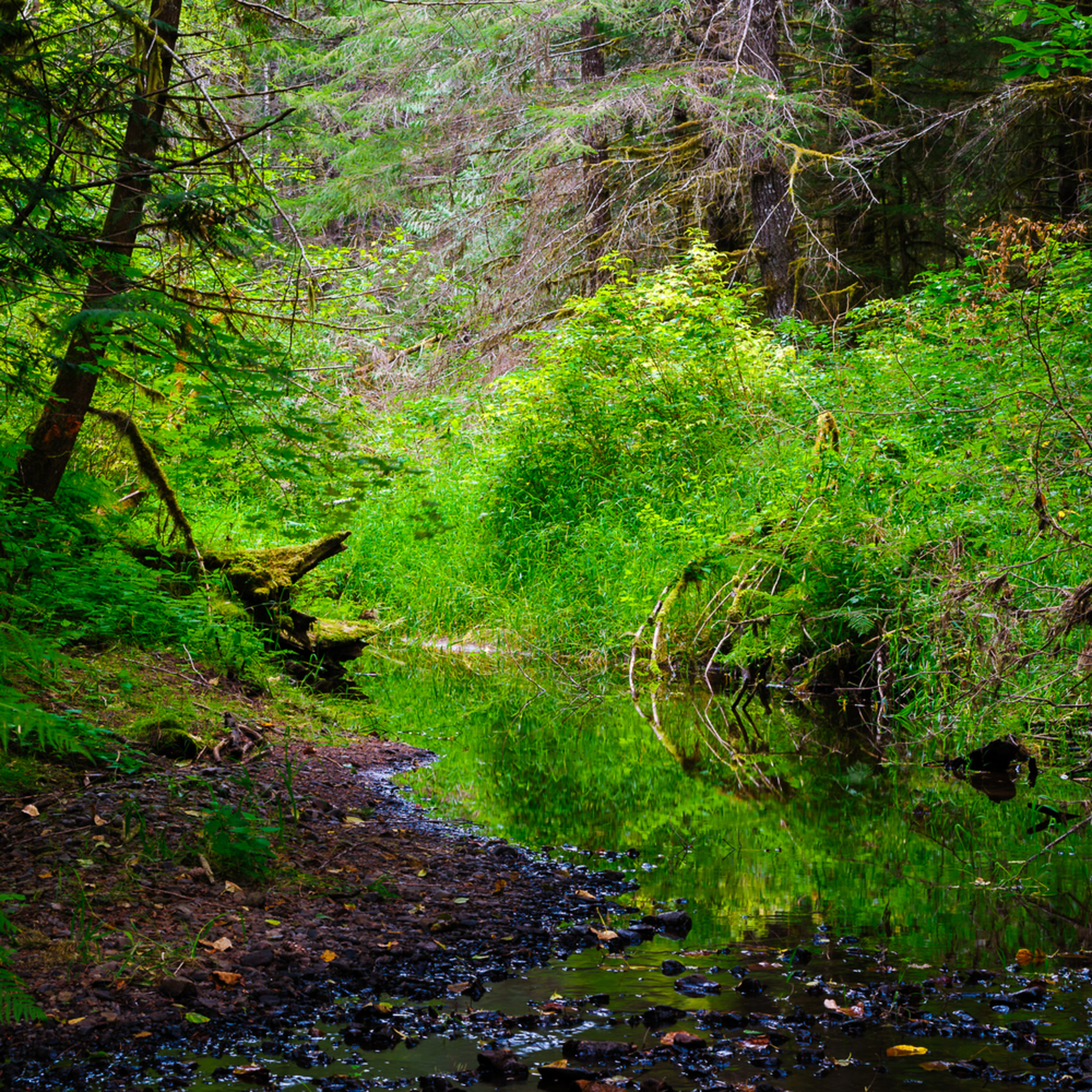Woods creek randle washington 2016 gn4uik