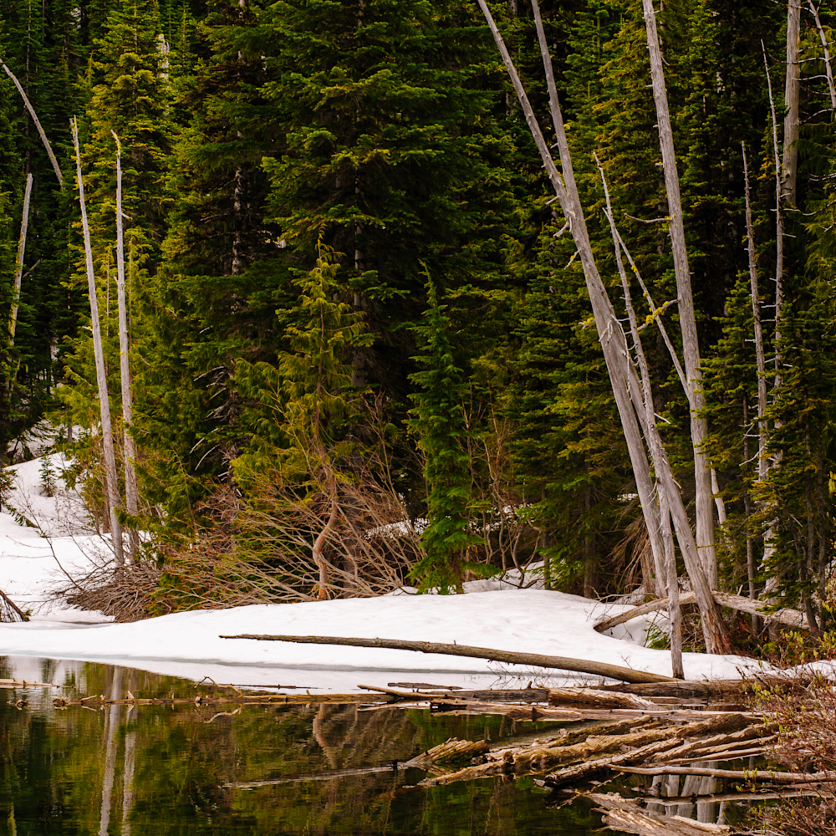 Early spring forest crystal lake mt rainier wa 2016 ibzxrl