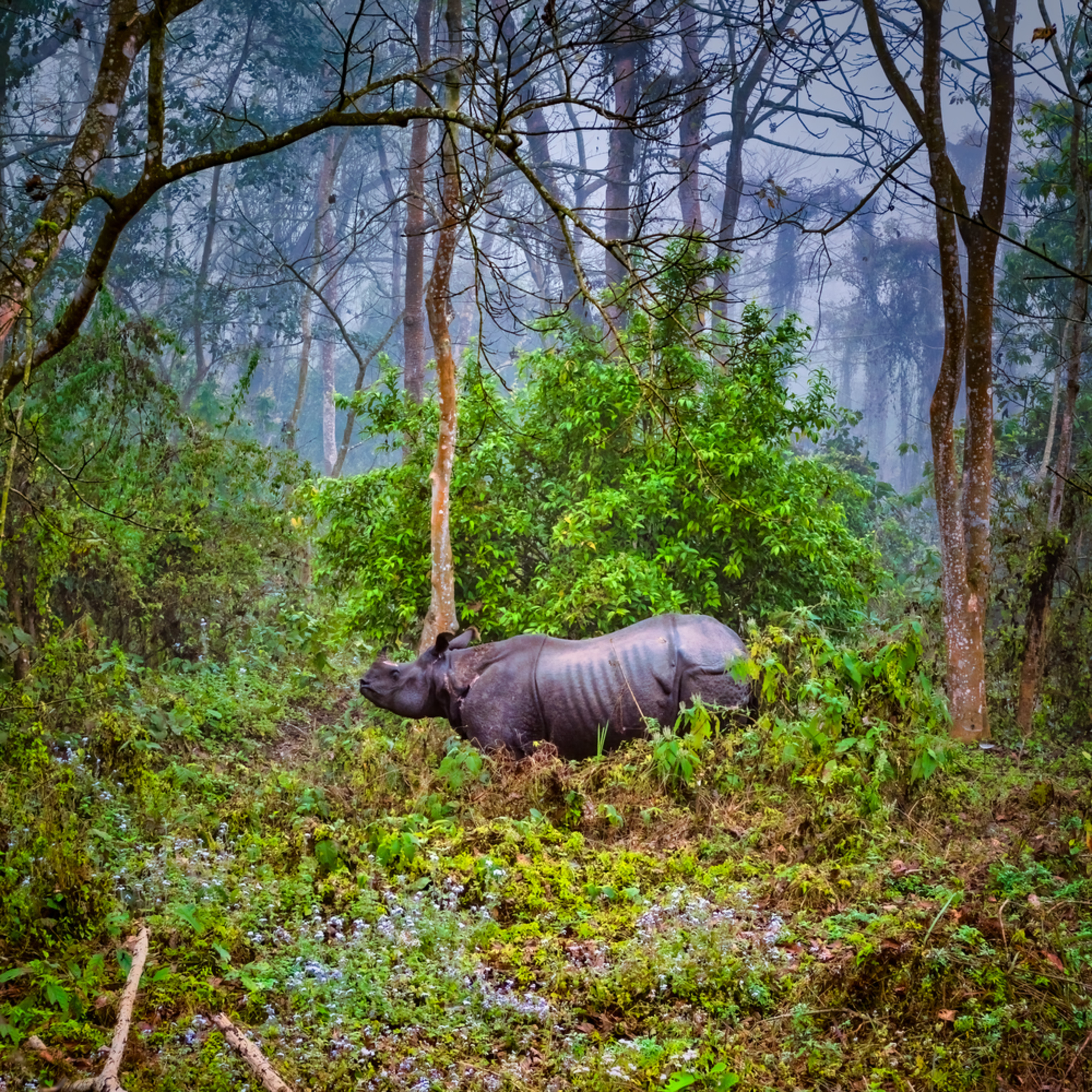 Indian rhino jpb9ji