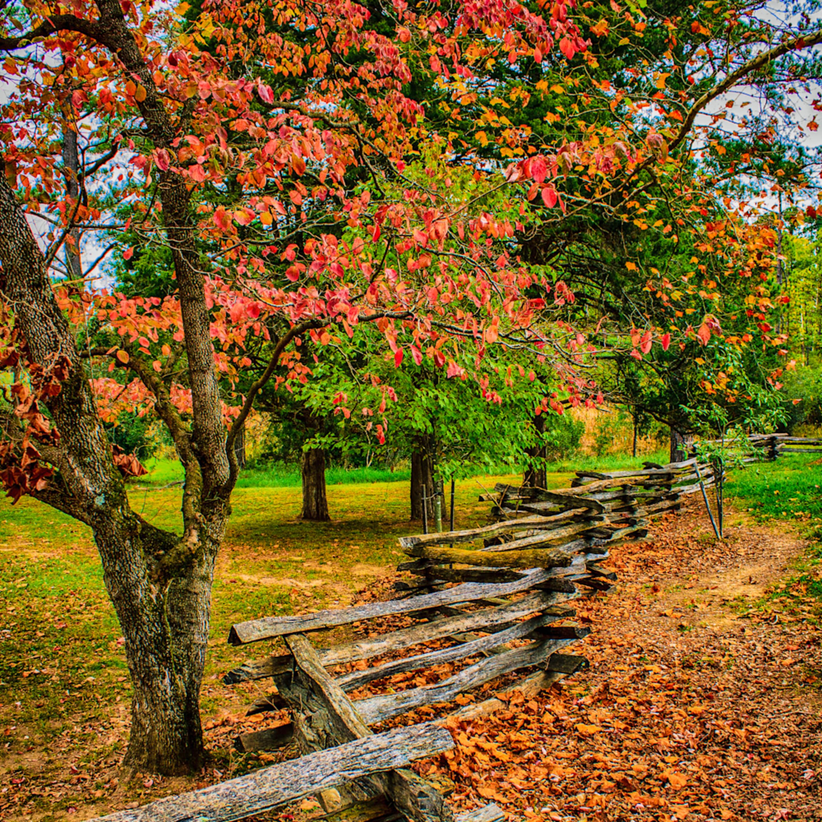 Autumn in virginia 1 of 1 llzyyd