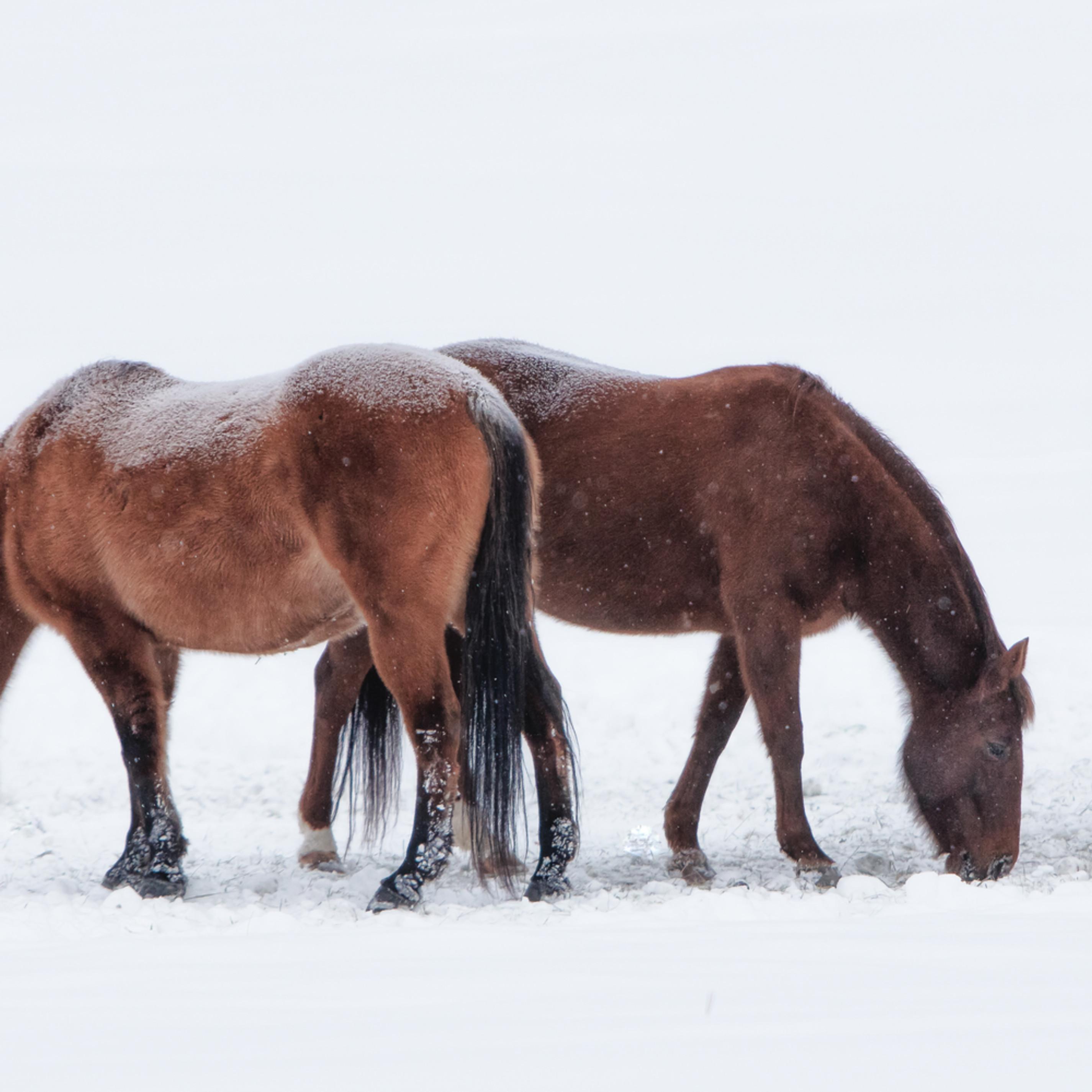 Winter blankets ujhwzj