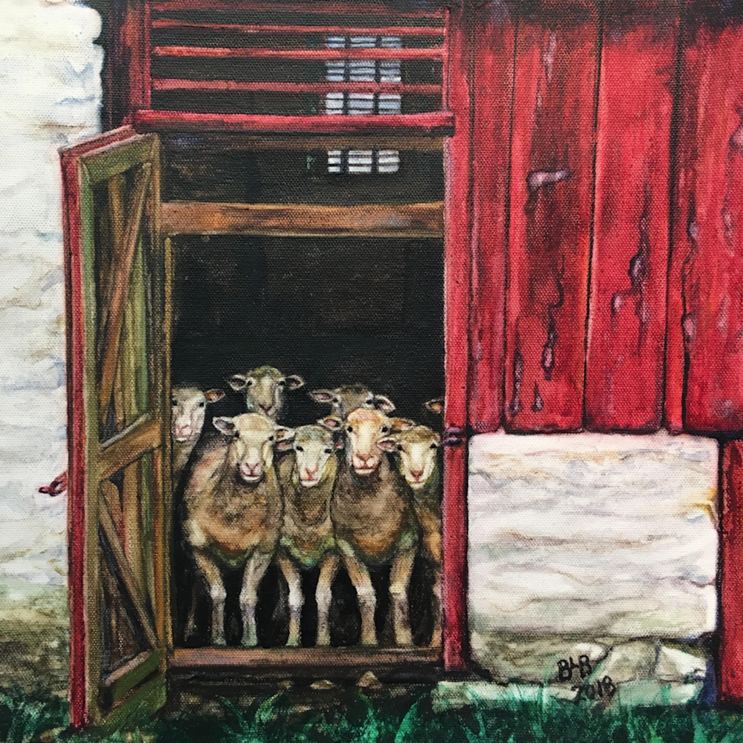 Sheep   eight dorsets at the door o5rdql