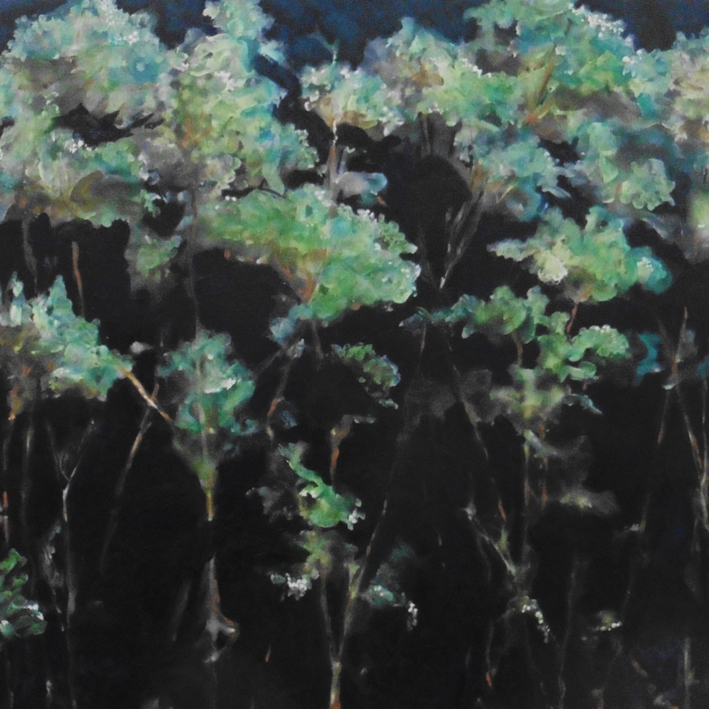 Moonlight hydrangeas qmveis