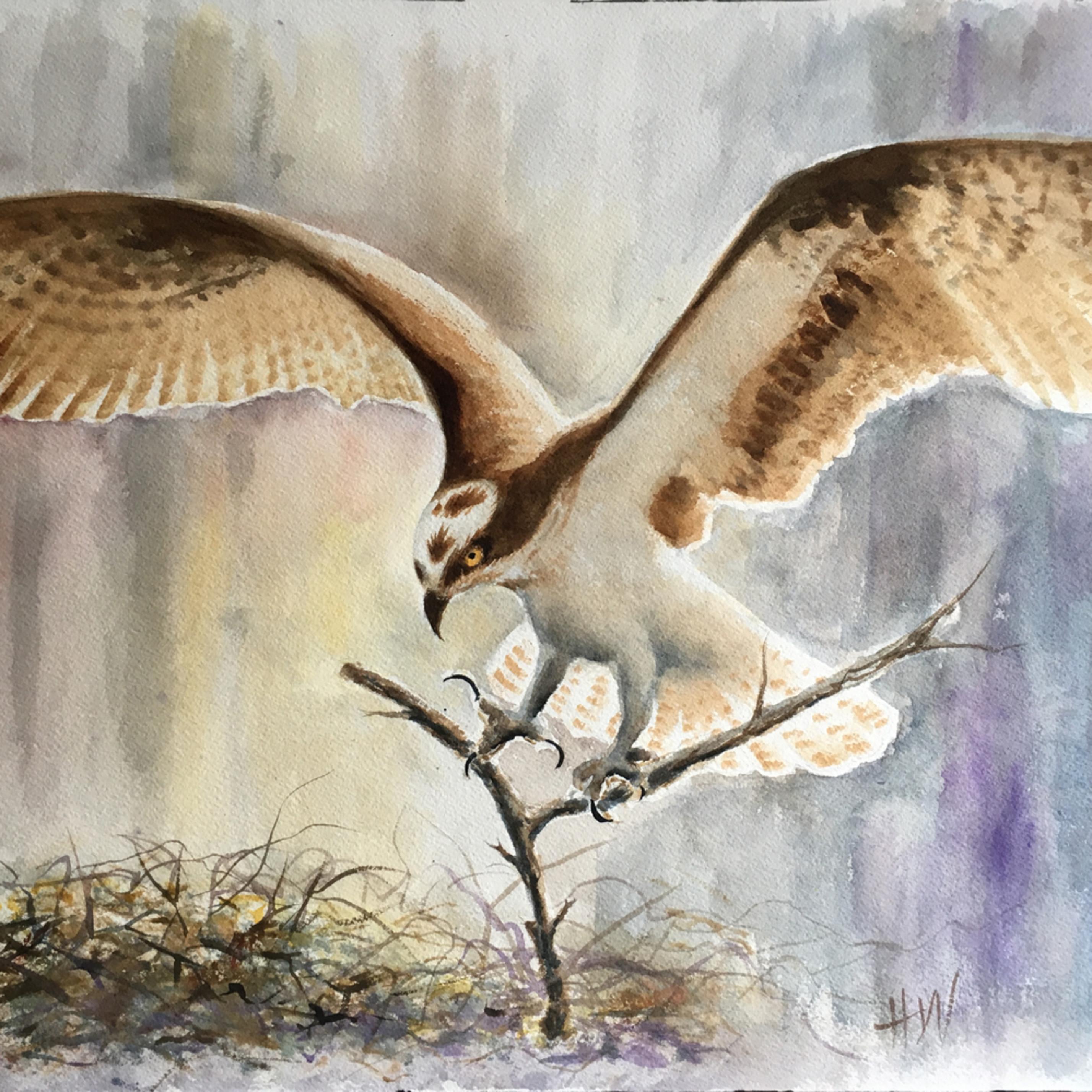 Osprey with stick rgt6bn