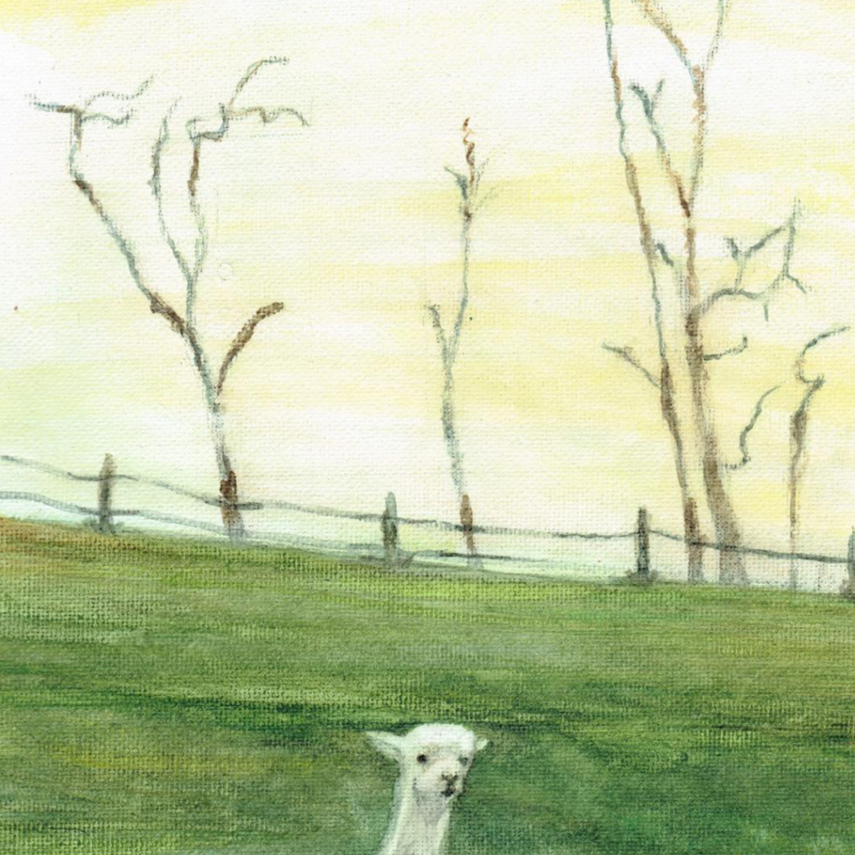 White alpaca vertical wlyrtl