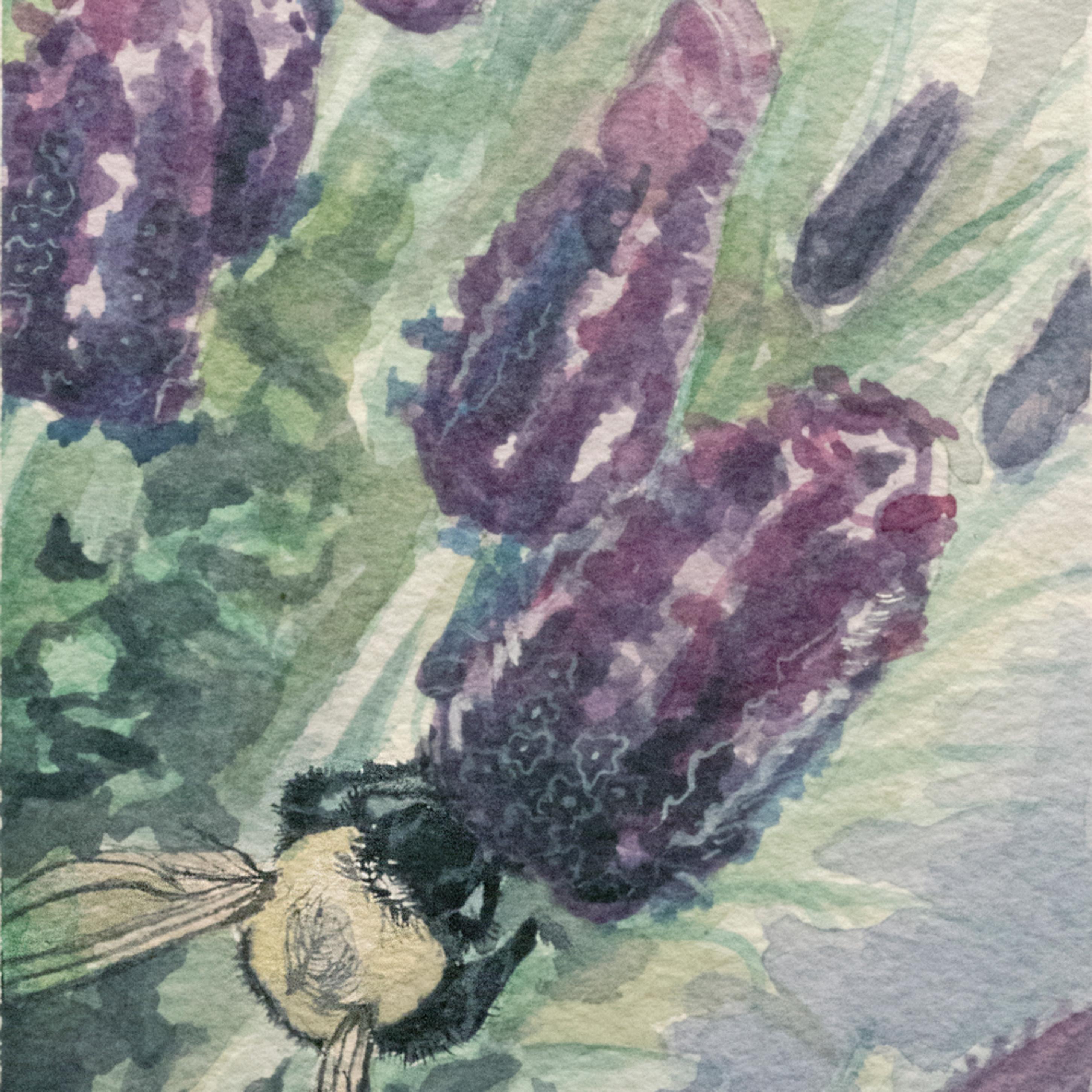 Bumblebee q6ncw7