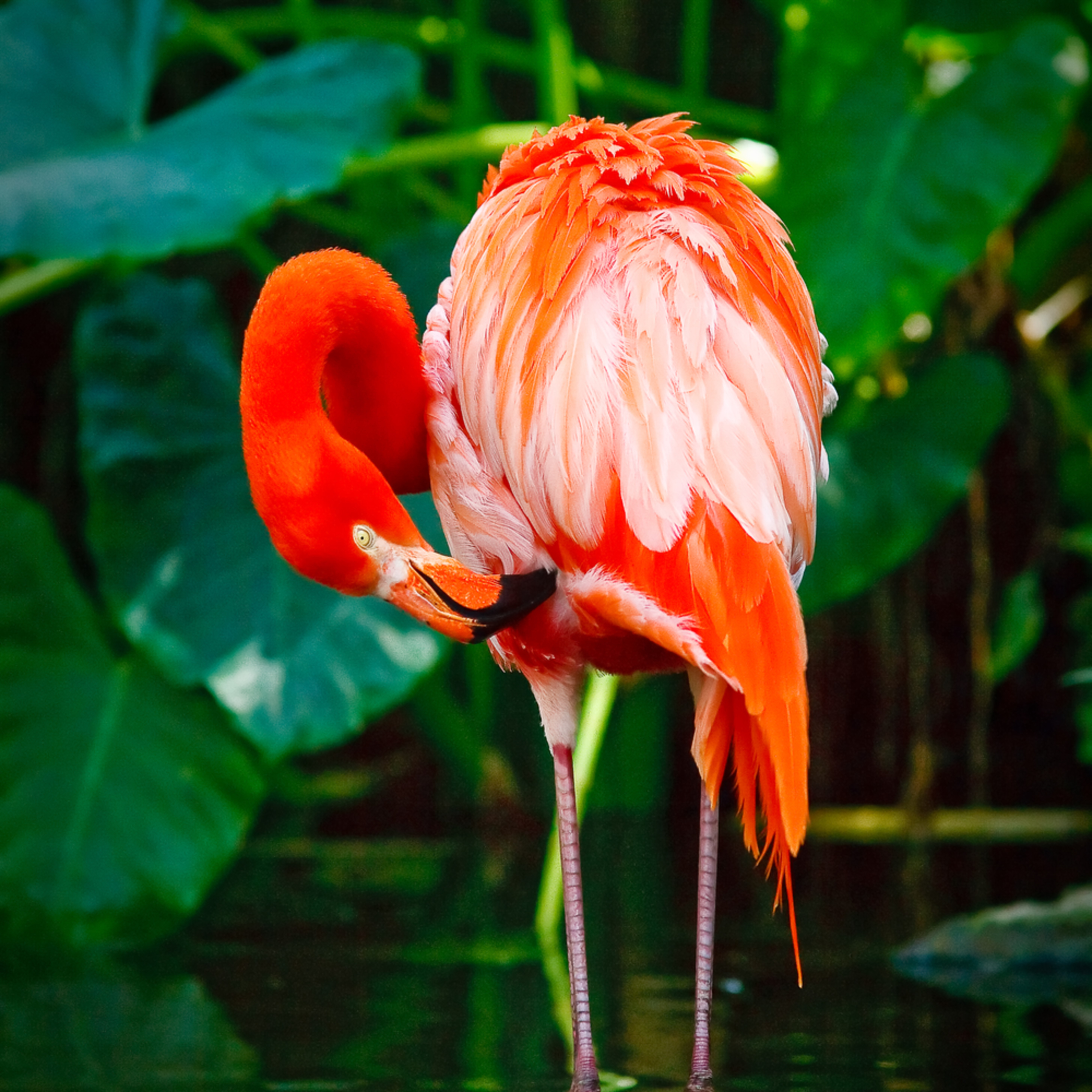 Flamingo 02 dfq7vz