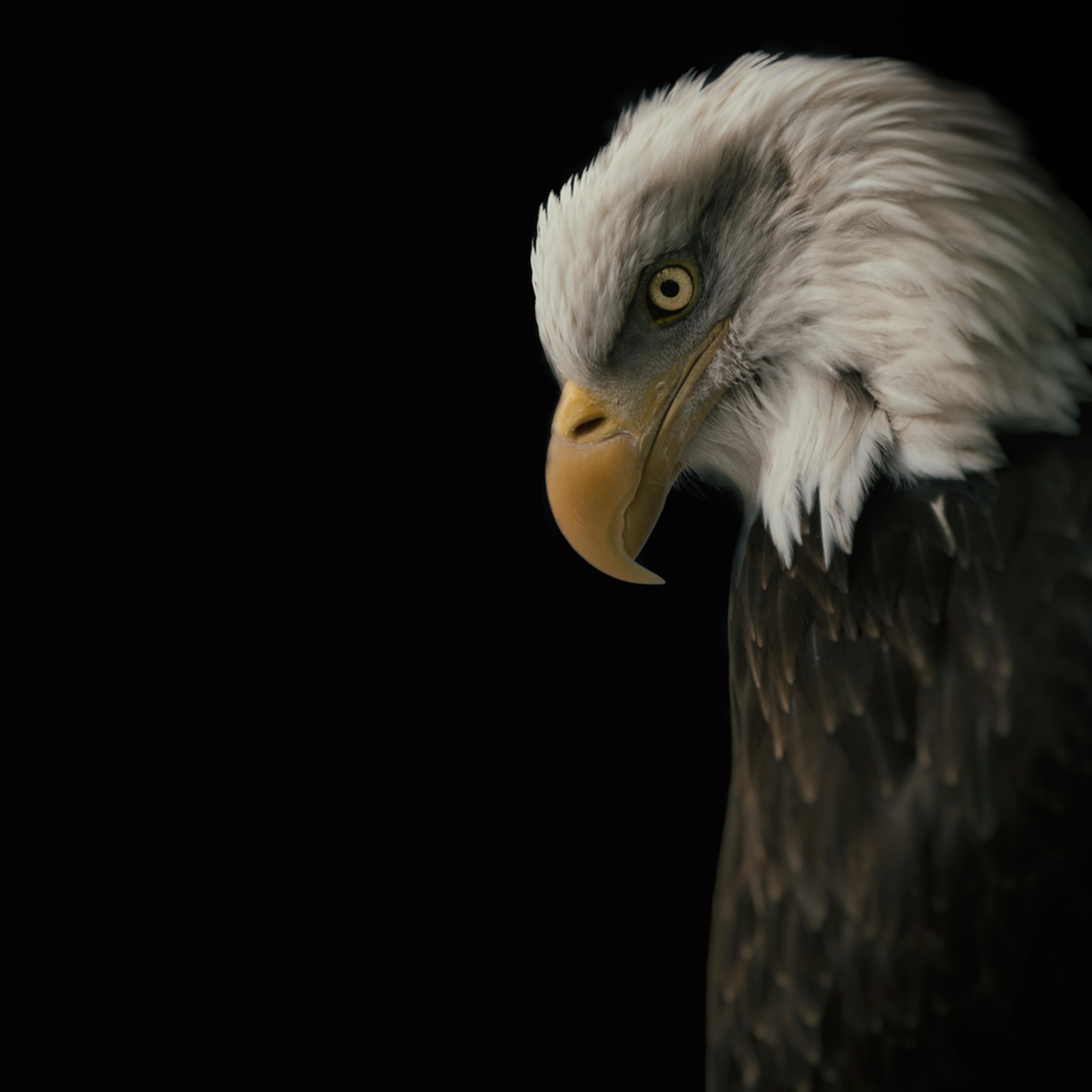 Eagle bow bxrmfe