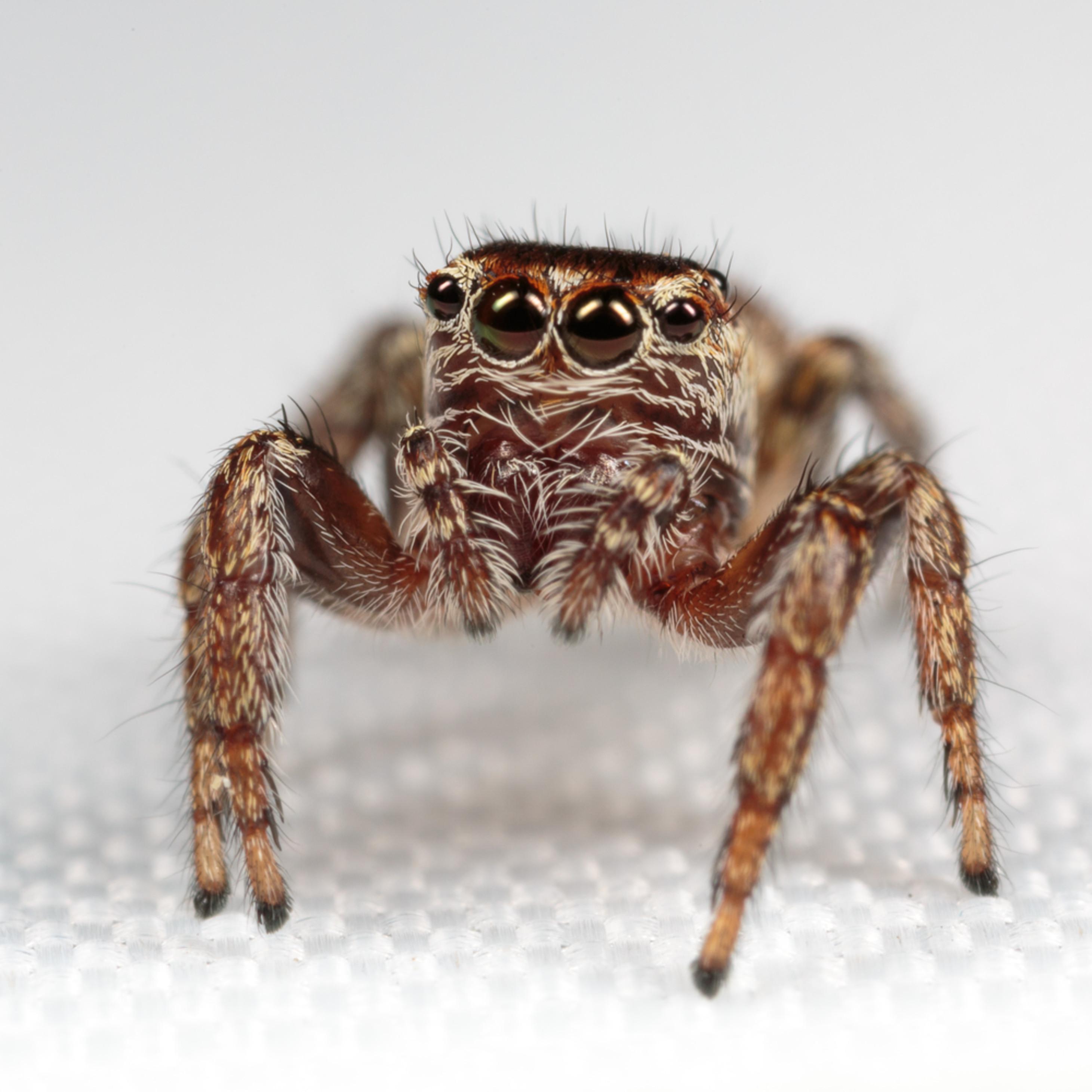 20160829 spider id 00091 zdx0zg