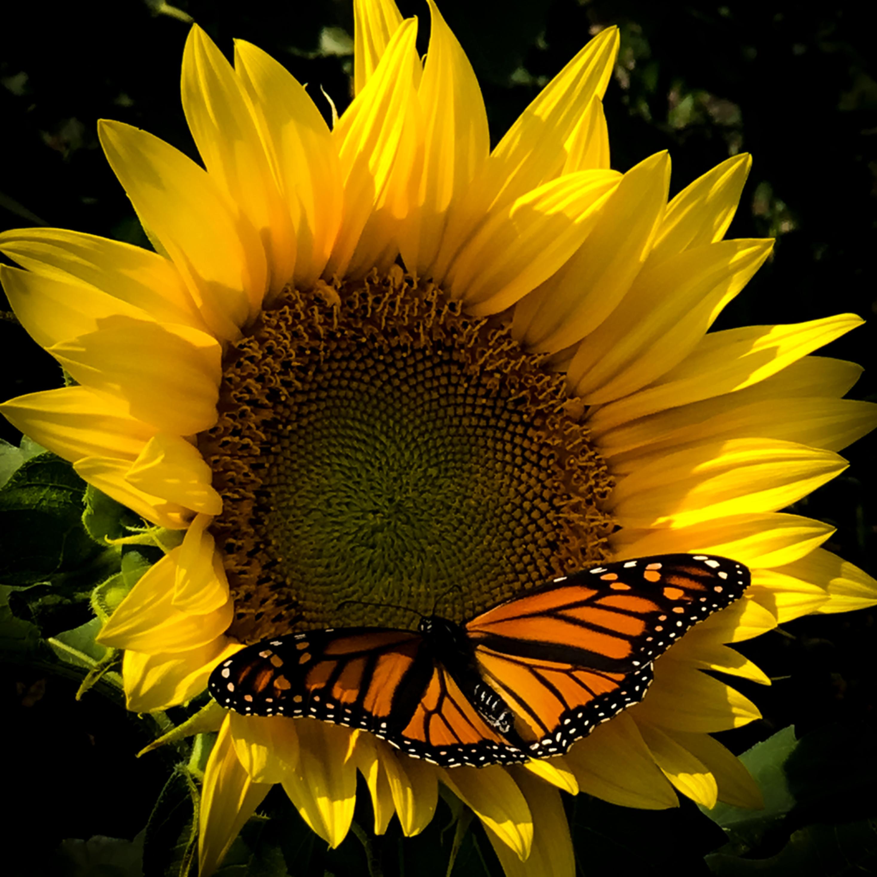 Sunflower butter ghm5l8