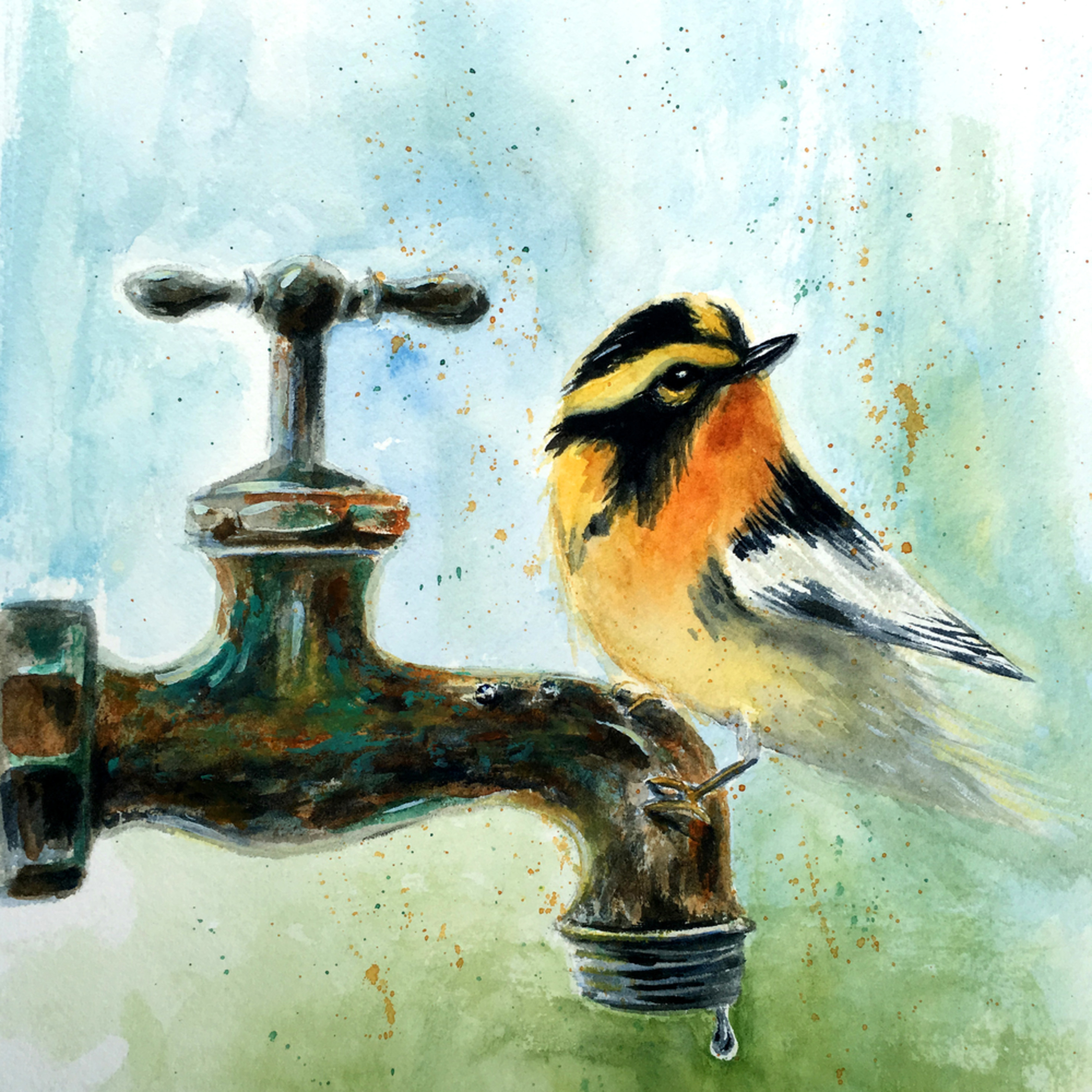 Blackburnian warbler on pipe fcgq1m