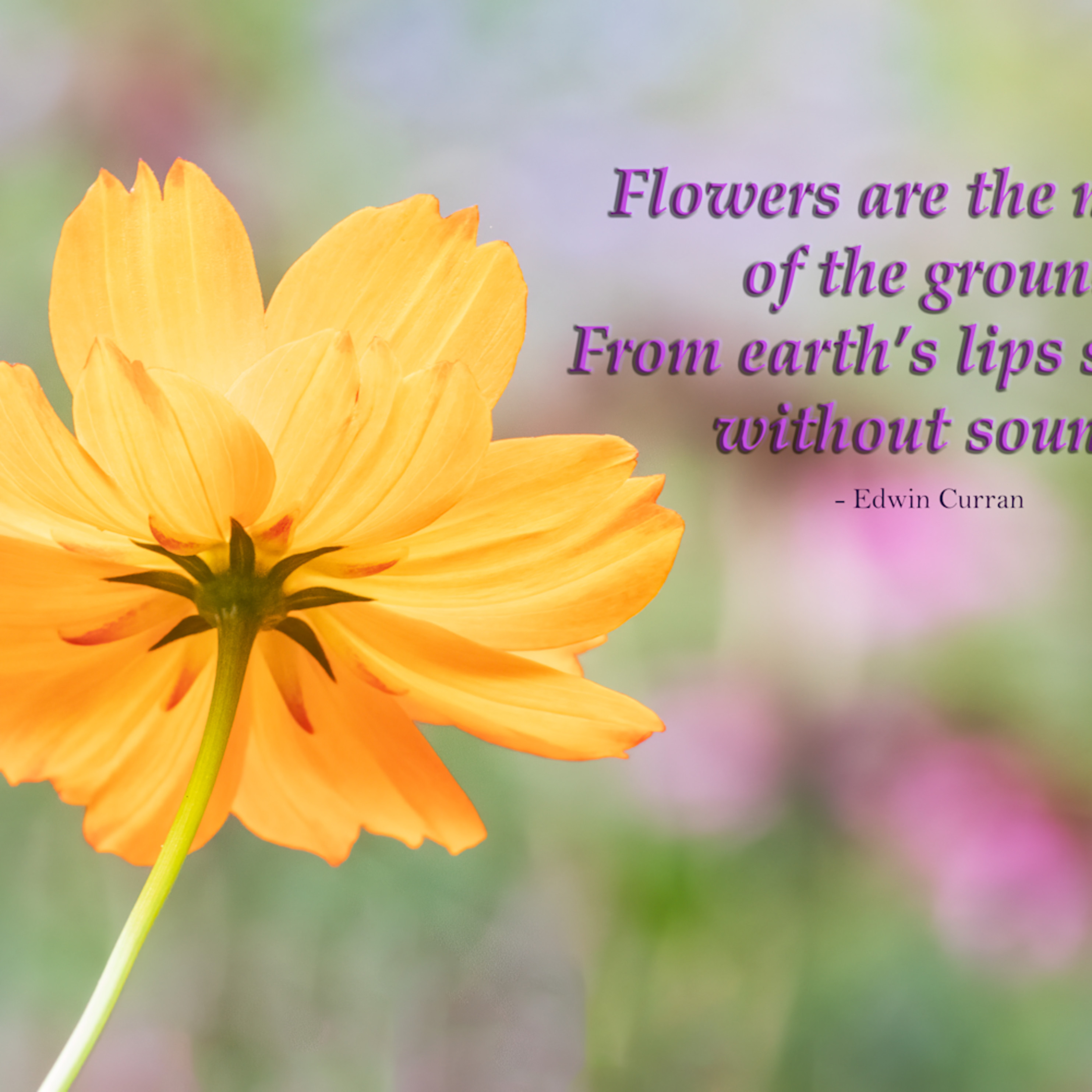 Flowers are the music of the ground m7zstr