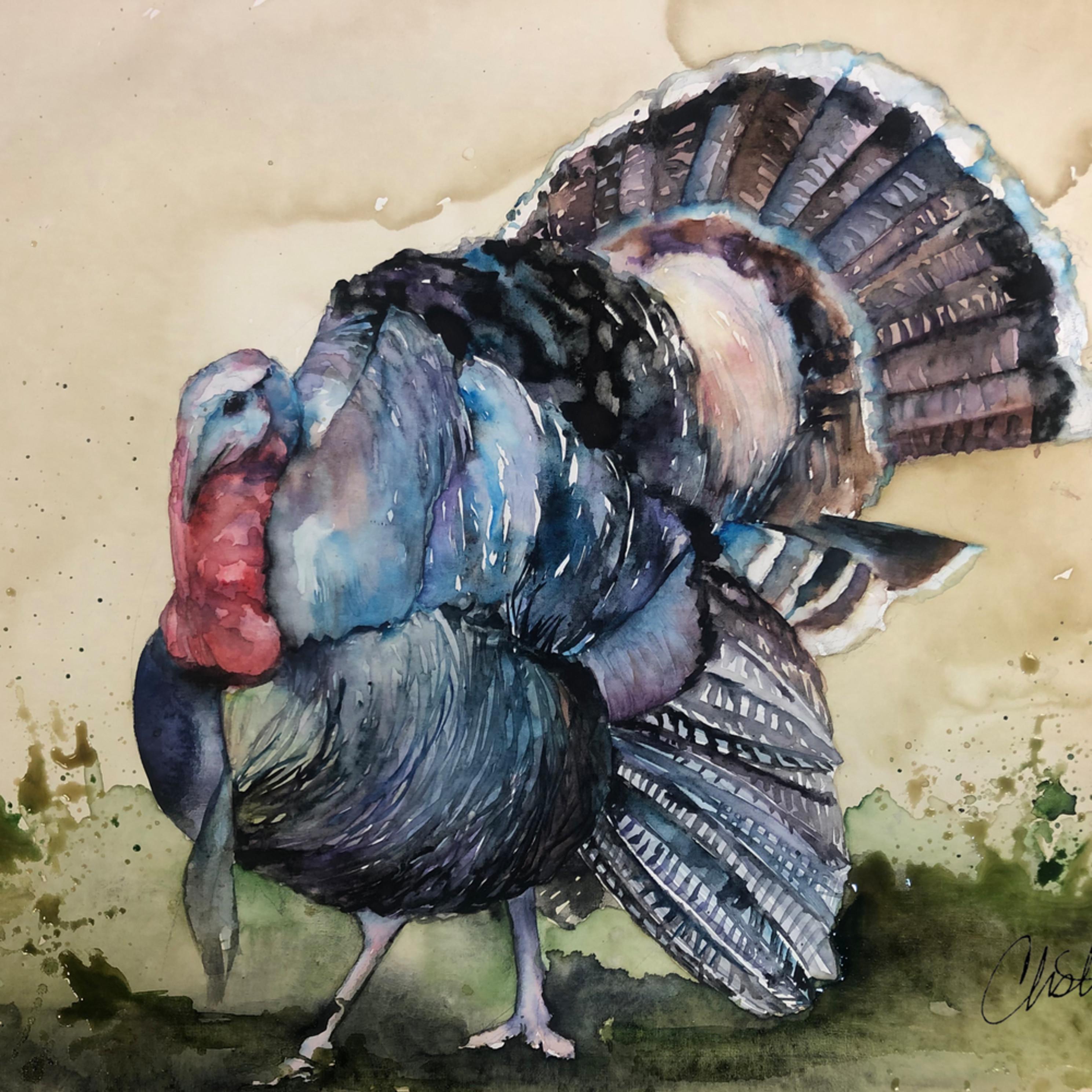 Turkey signed dp5fym