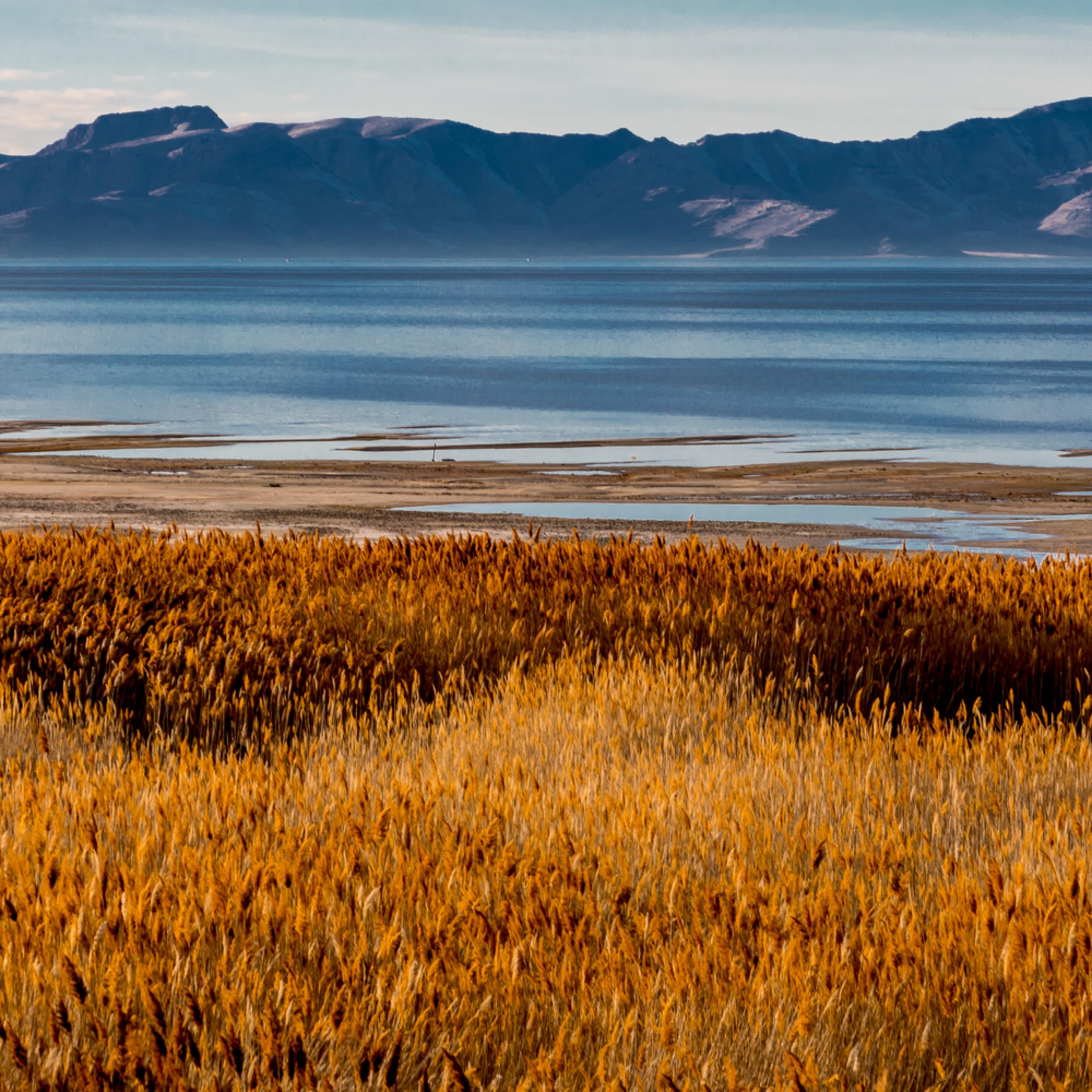 Antelope island salt lake nsclef