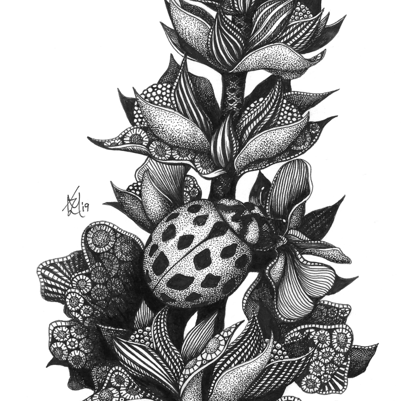 Ladybug qpe5bf