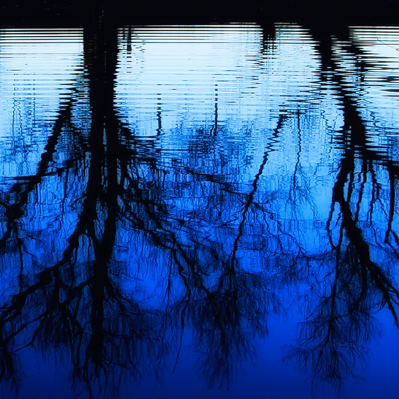 Aaathe water trees 4000 sig down ieucci