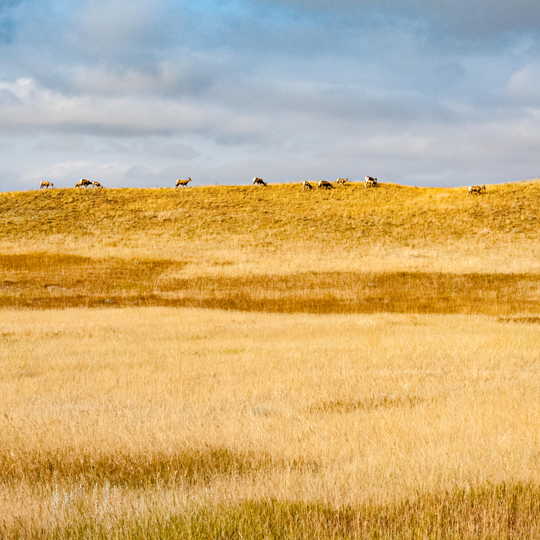 Badlands goats on horizon panorama akdtnz