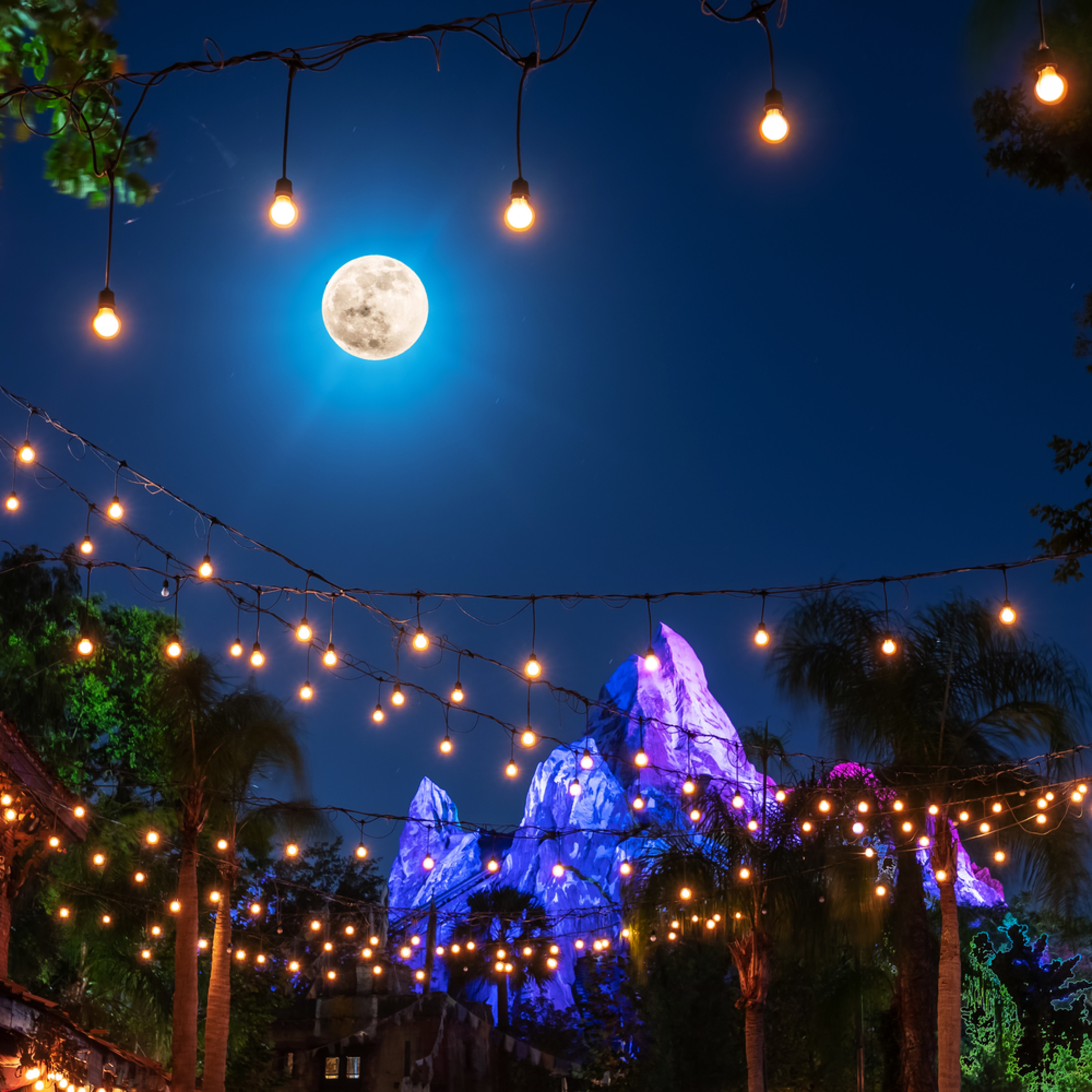 Lights of expedition everest clmyvt