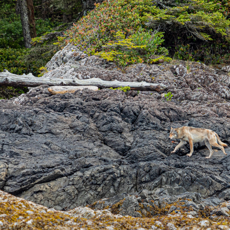Sea wolf i36en4