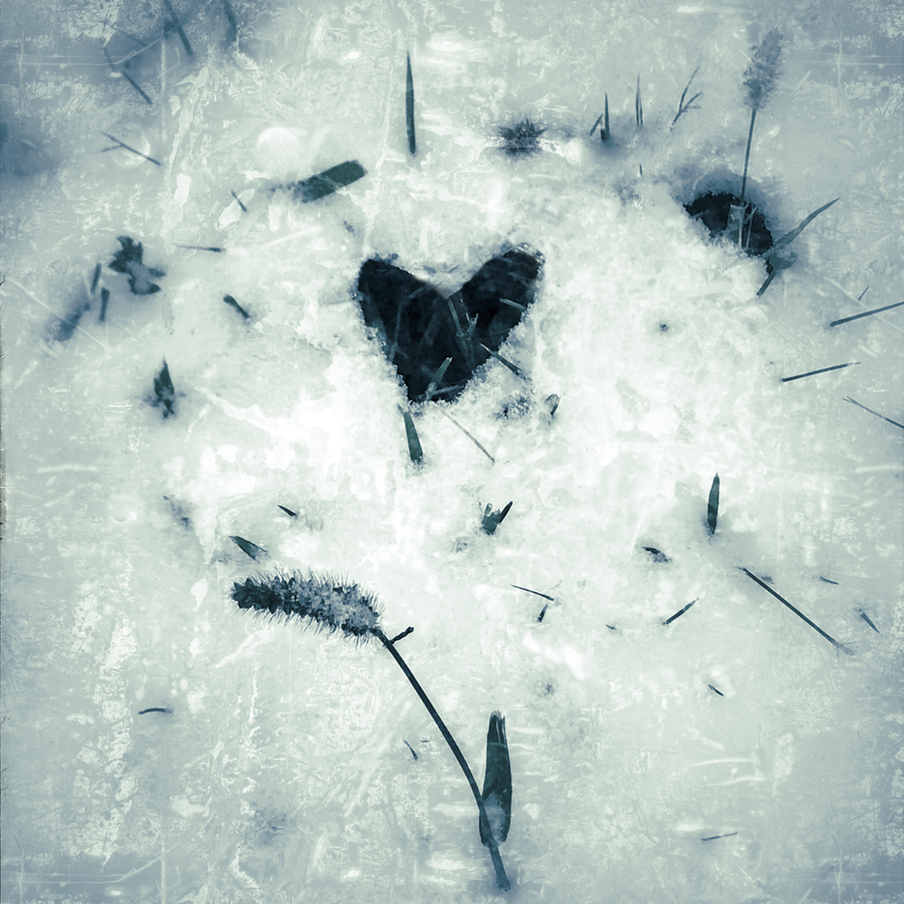 First snow foxtails and heart cheycg