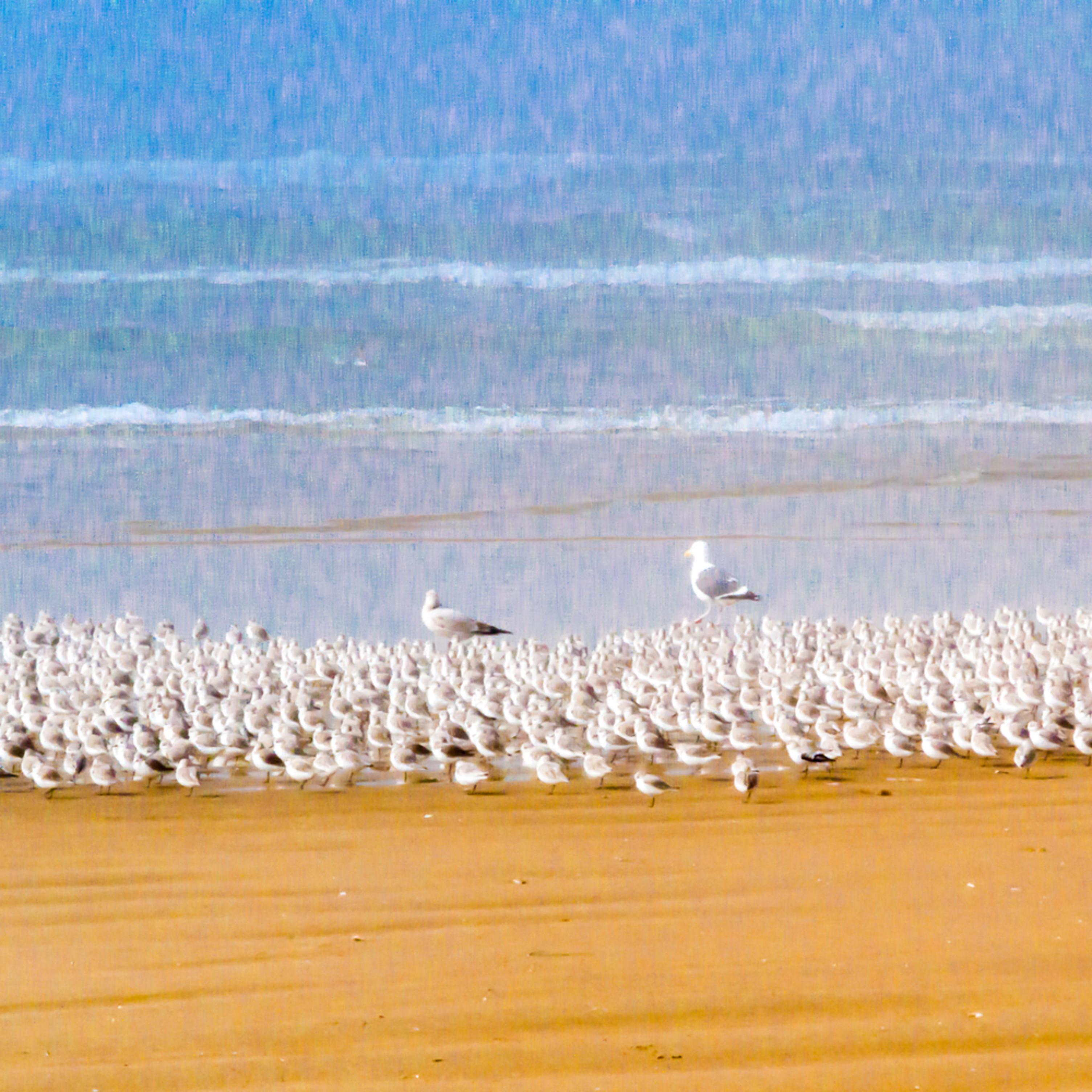 Sandpiperparade pd164s