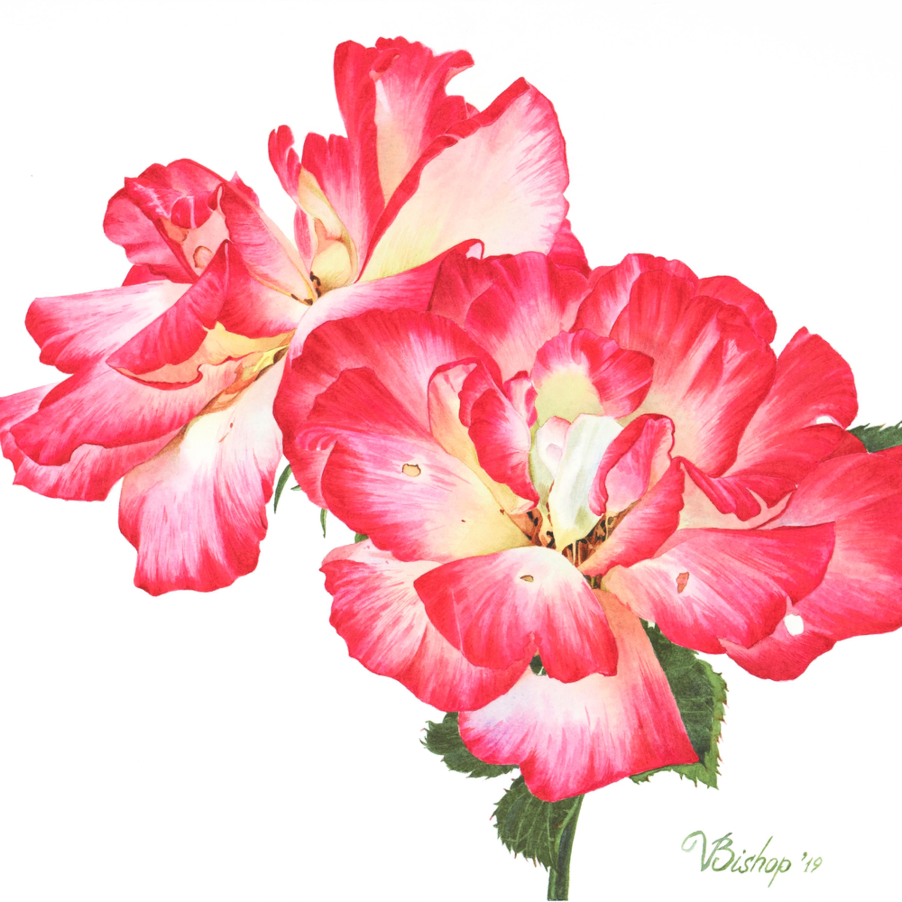 Grandiflora roses wnoabf