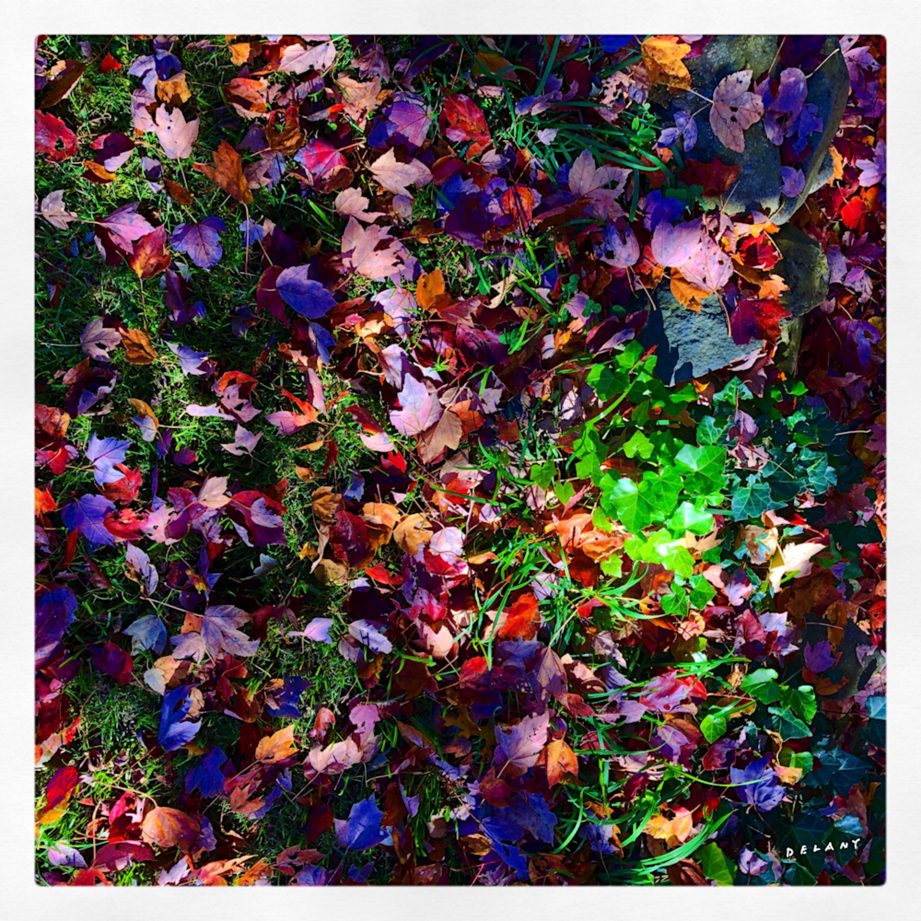 F fall leaves1 az8htq
