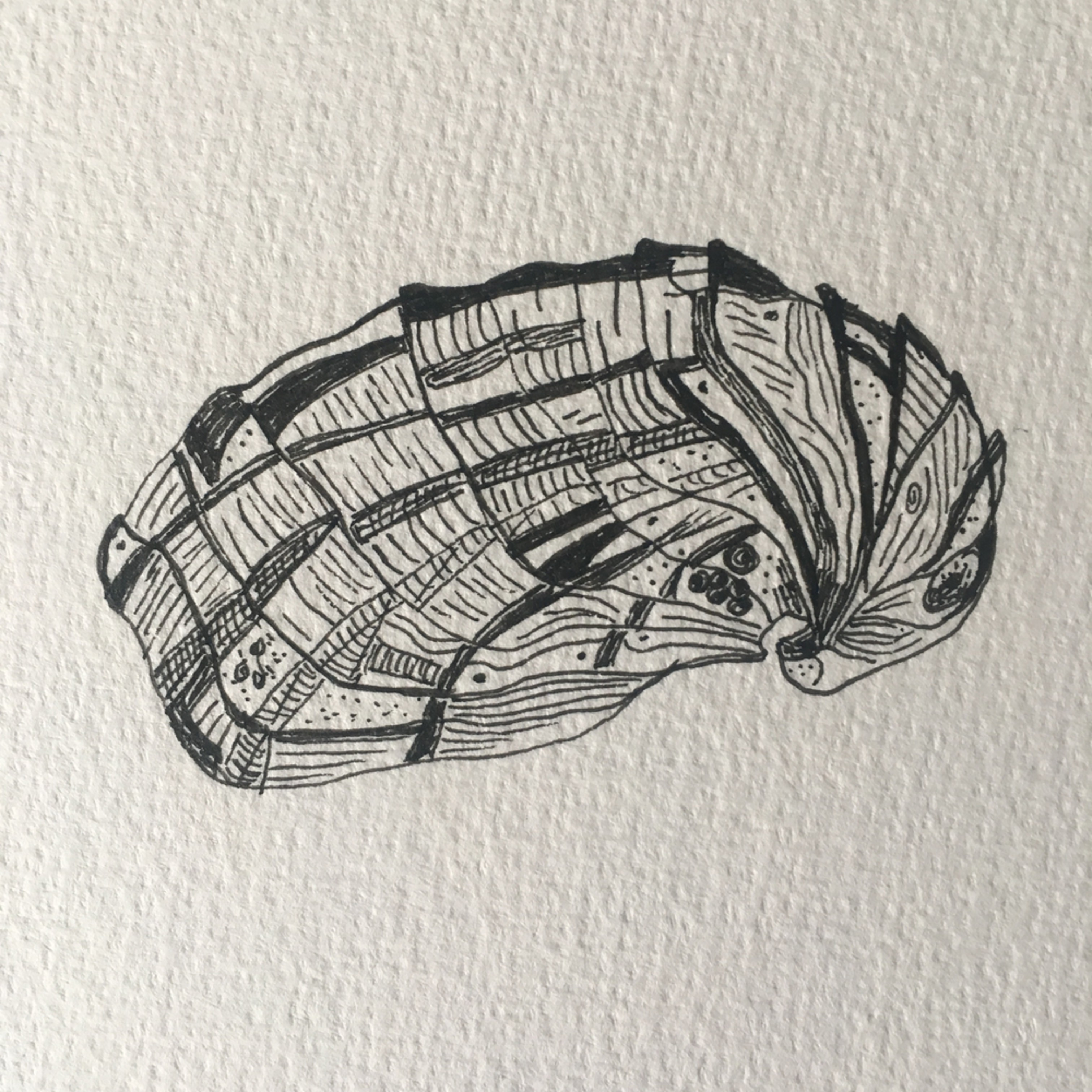 Borg shannon oyster 03 llqrmd