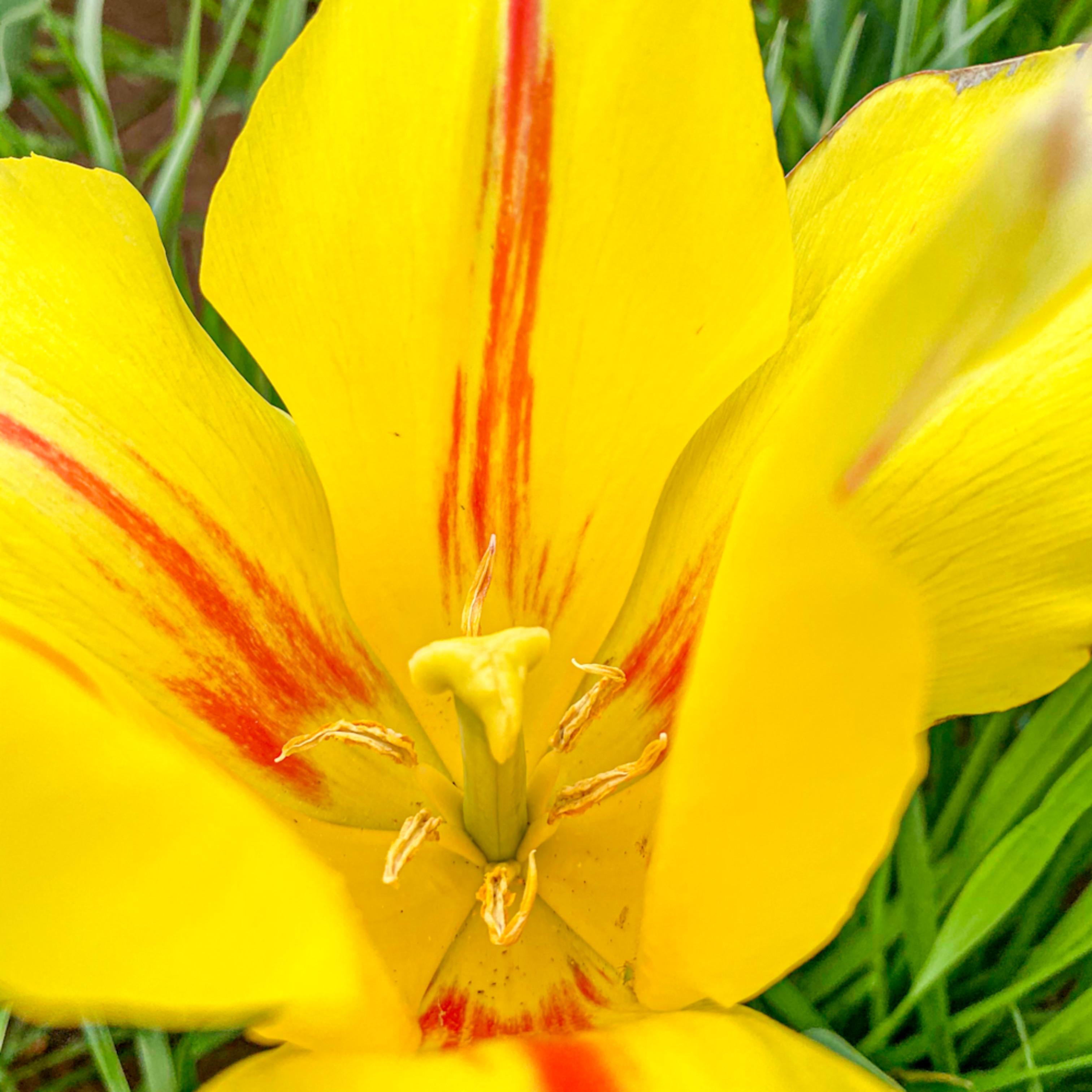 Flower5567 jcklfp