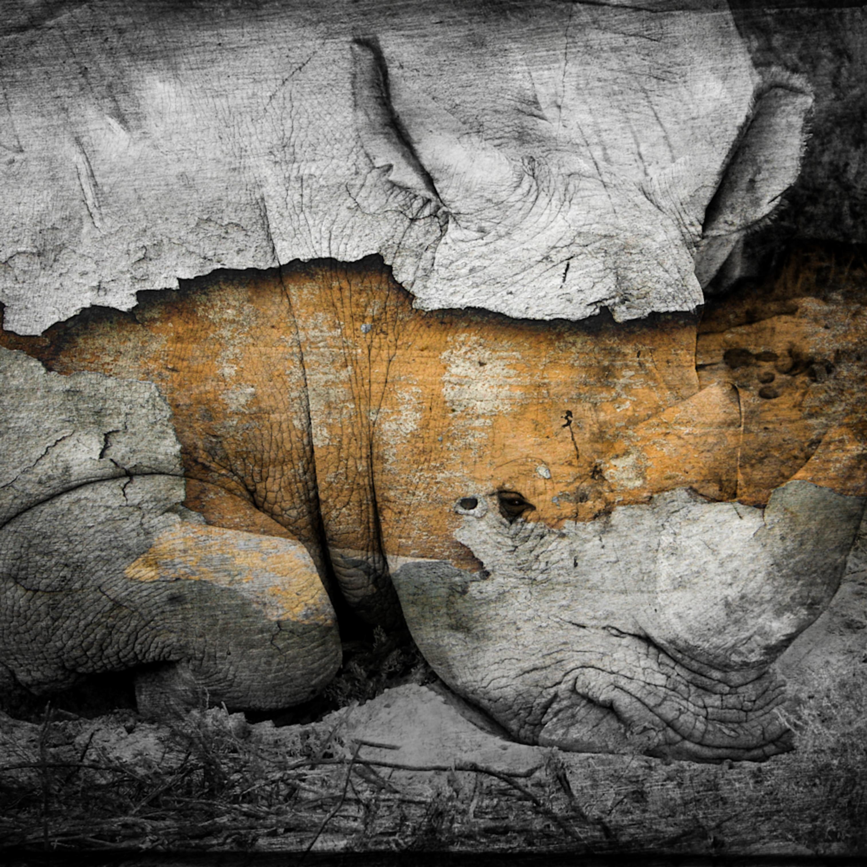 Favorite rhino split dsc06611 asf v5pdpa