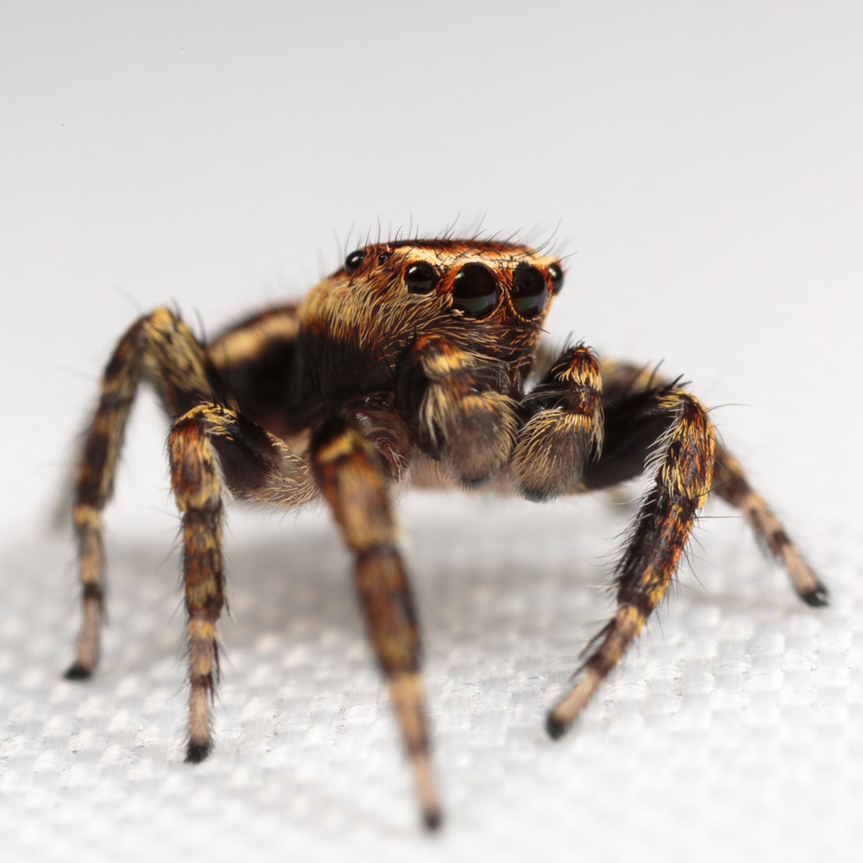 20160829 spider id 00096 dksqzb