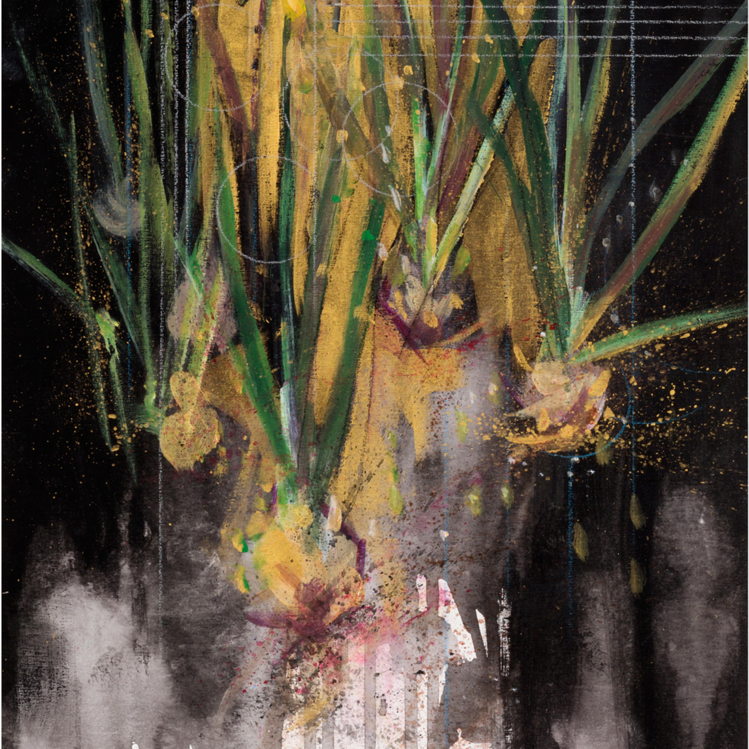 The chorus   daffodils ocqpm3