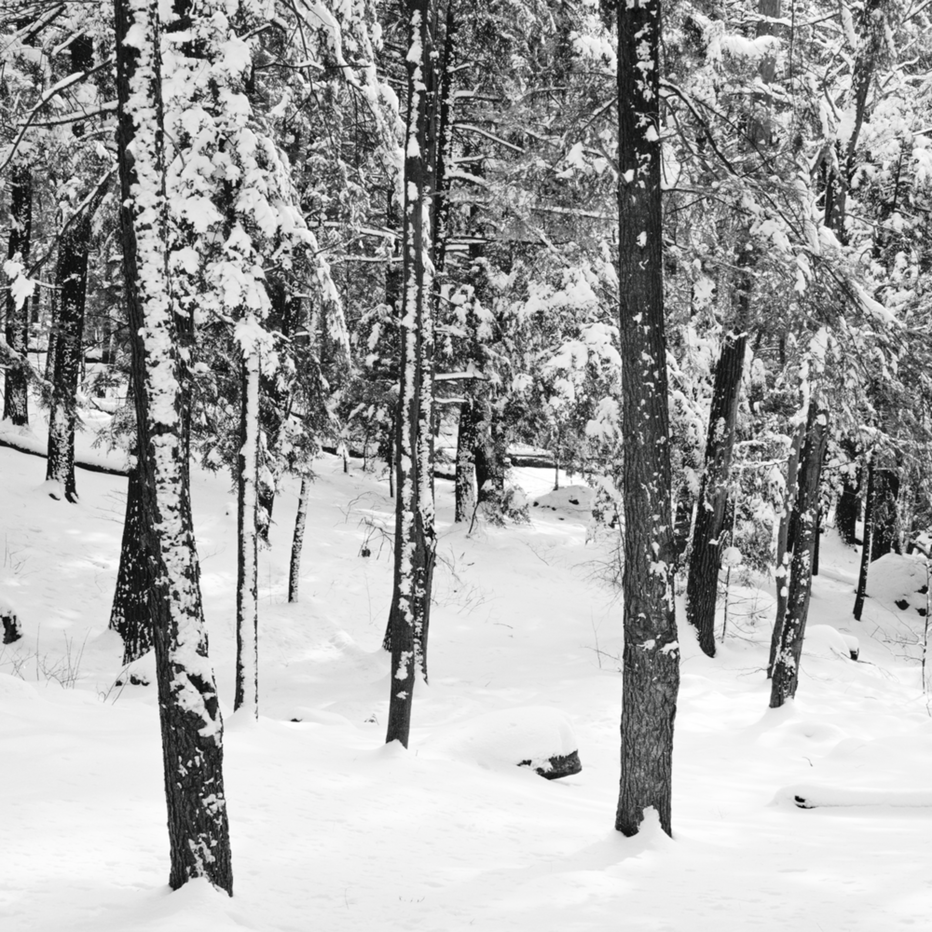 Valhalla nature fresh snow forest scene pano 1 wklxpi