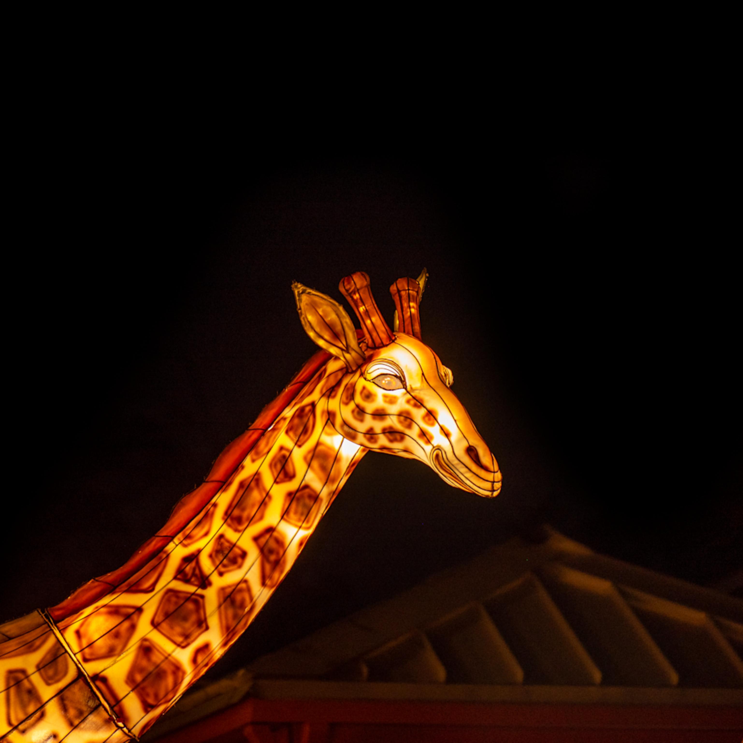 Giraffee tz4lpl
