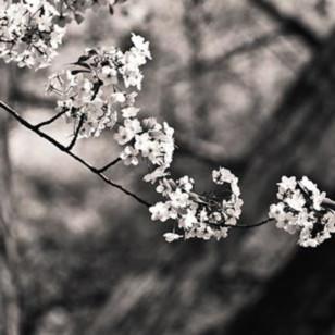 Delicate flowers ii wxfupb