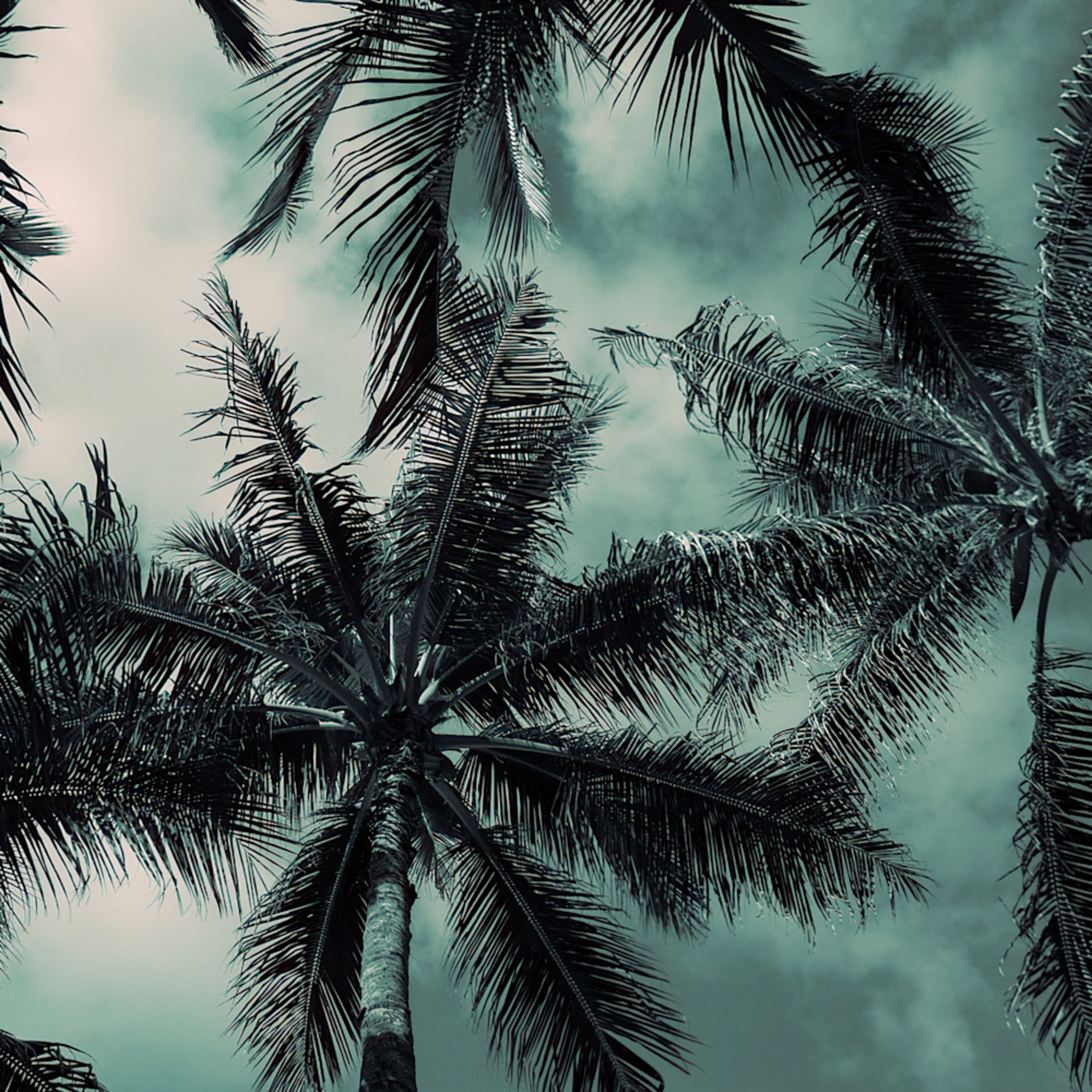 Palm trees  lifzmd