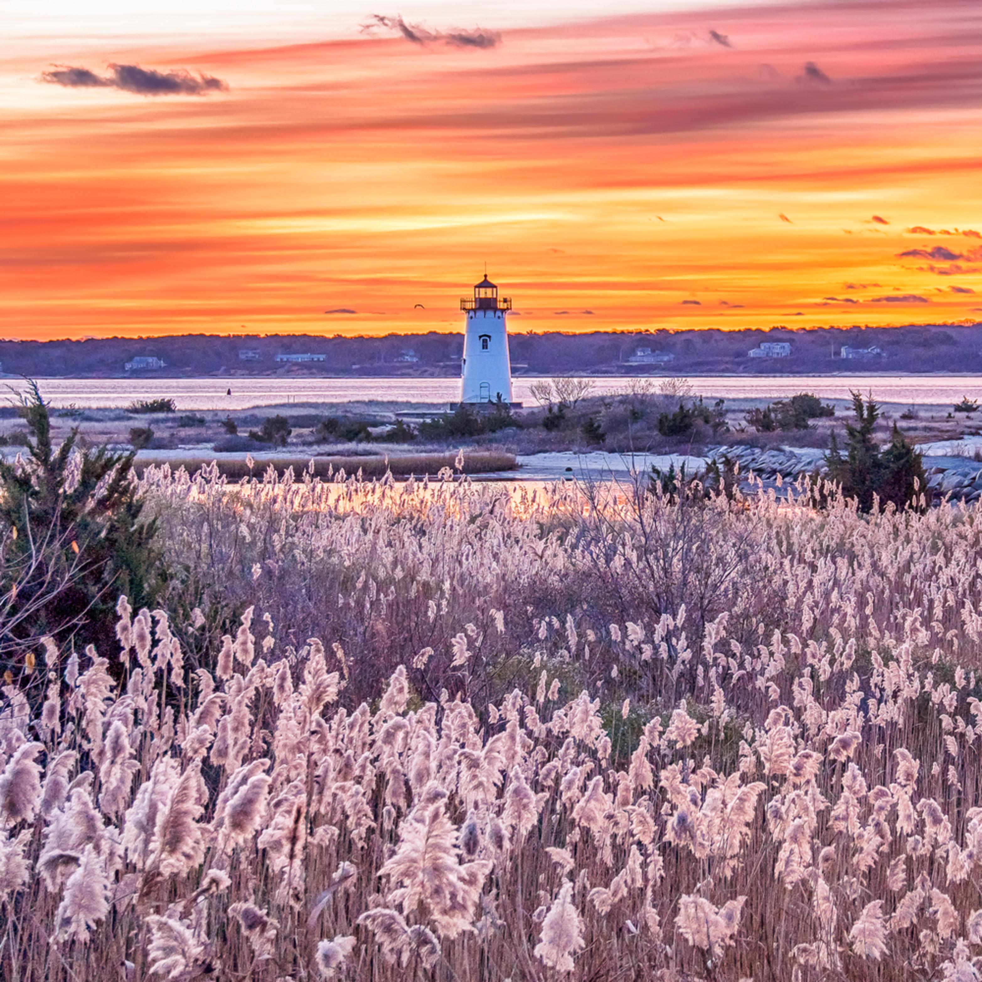 Edgartown light reeds ynau1p
