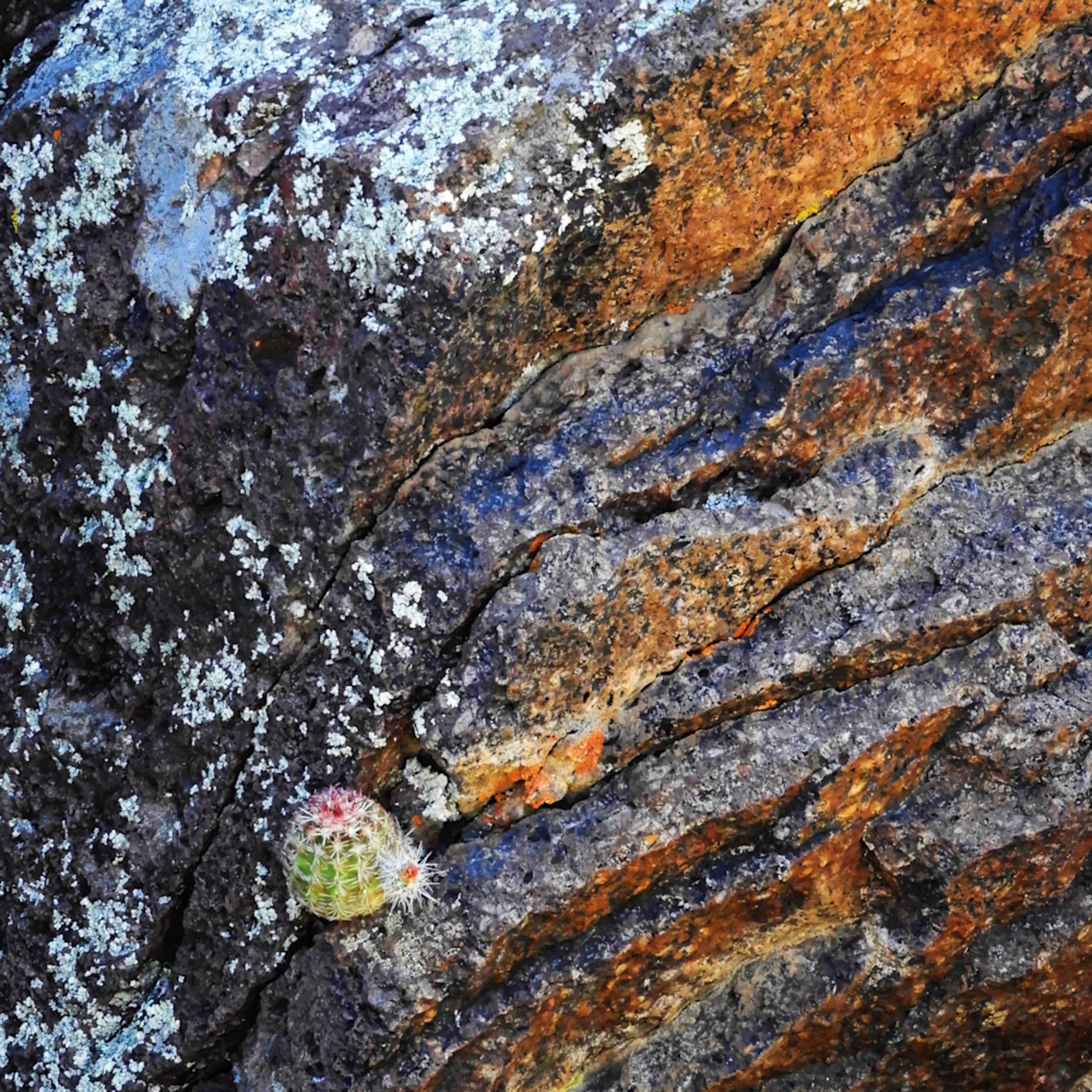 Dscn5888 cactus on rocks e8z1cj