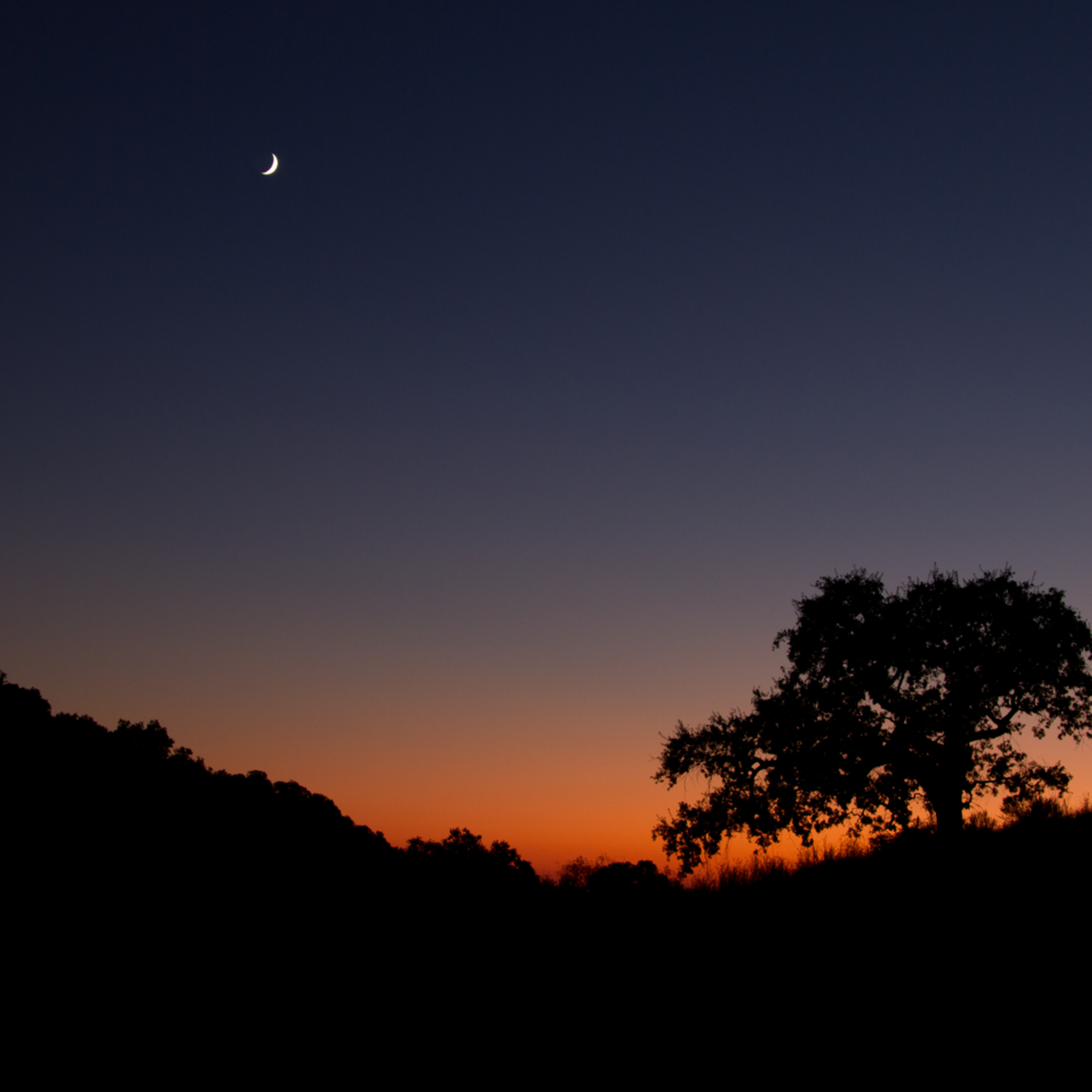 Sunset tree and moon l47hzq