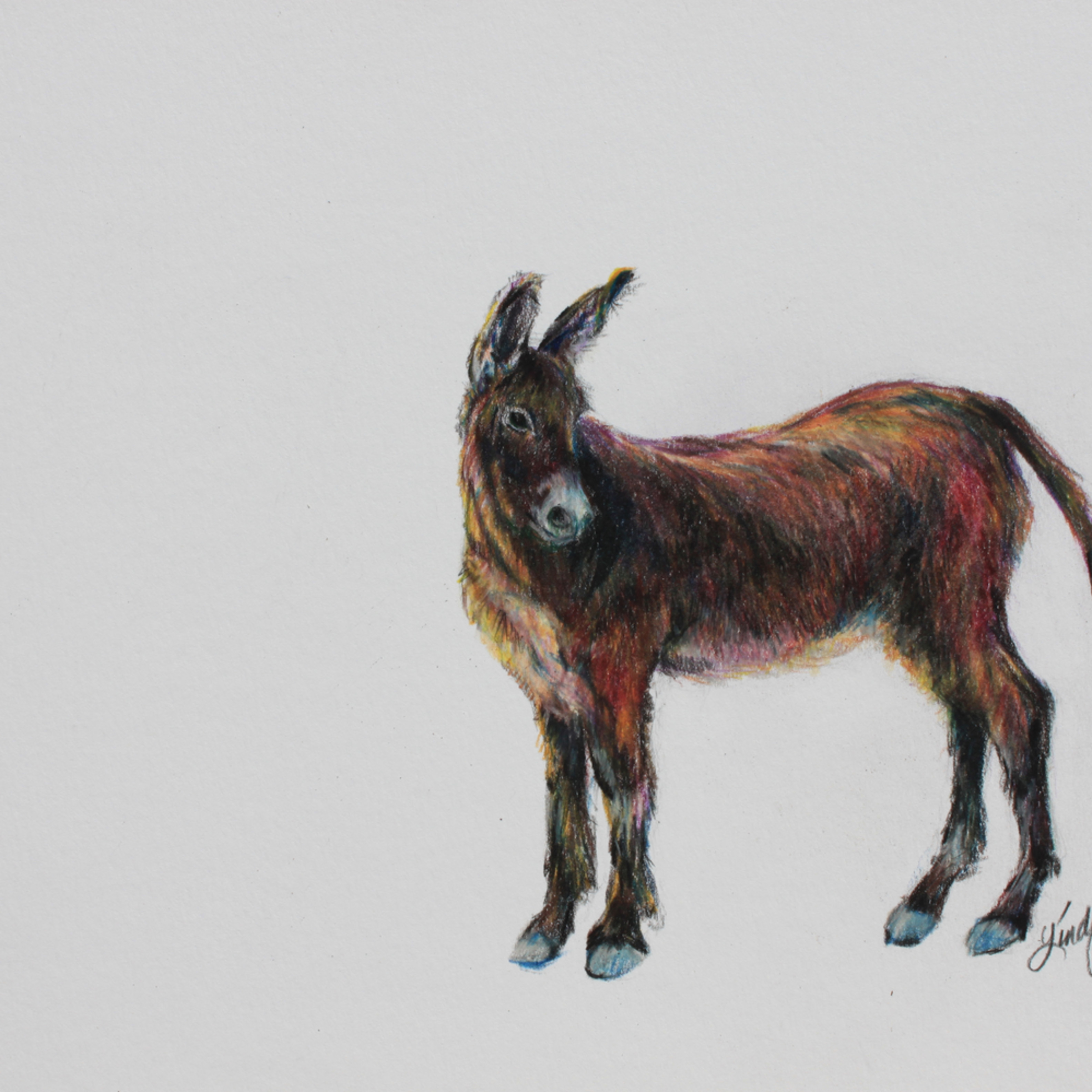 31i14 wild and free 8x10 colored pencil lindy c severns rtgkej