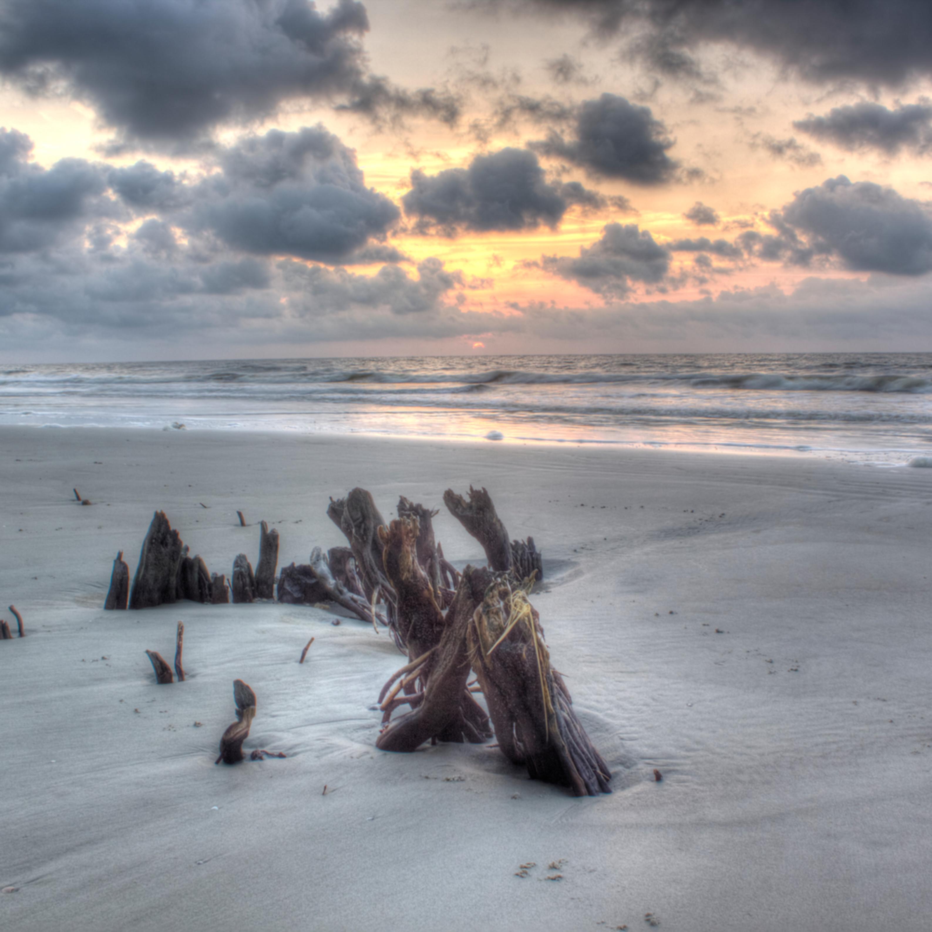 Sunrise with stumps bwinlt
