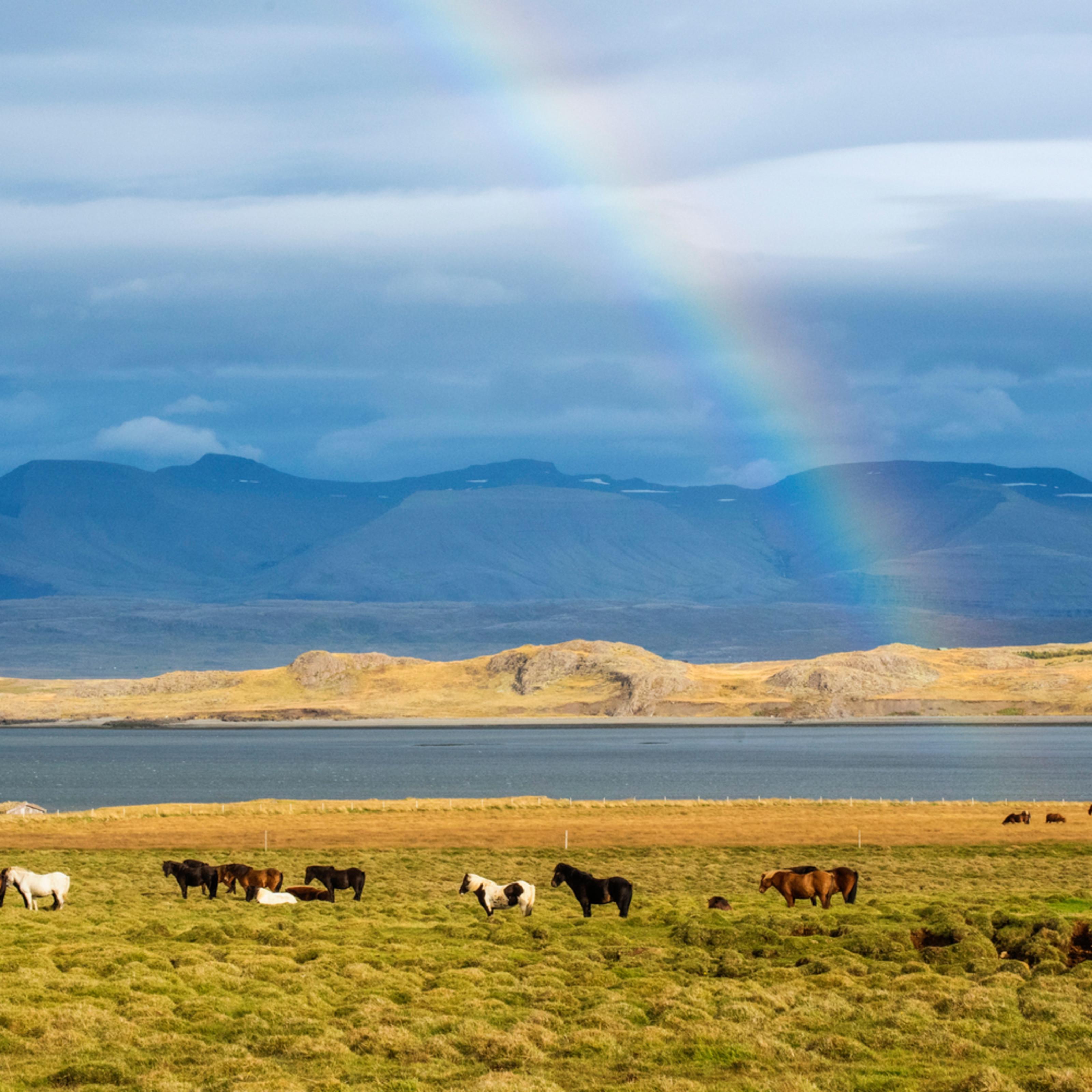 Rainbow horses qykn8z