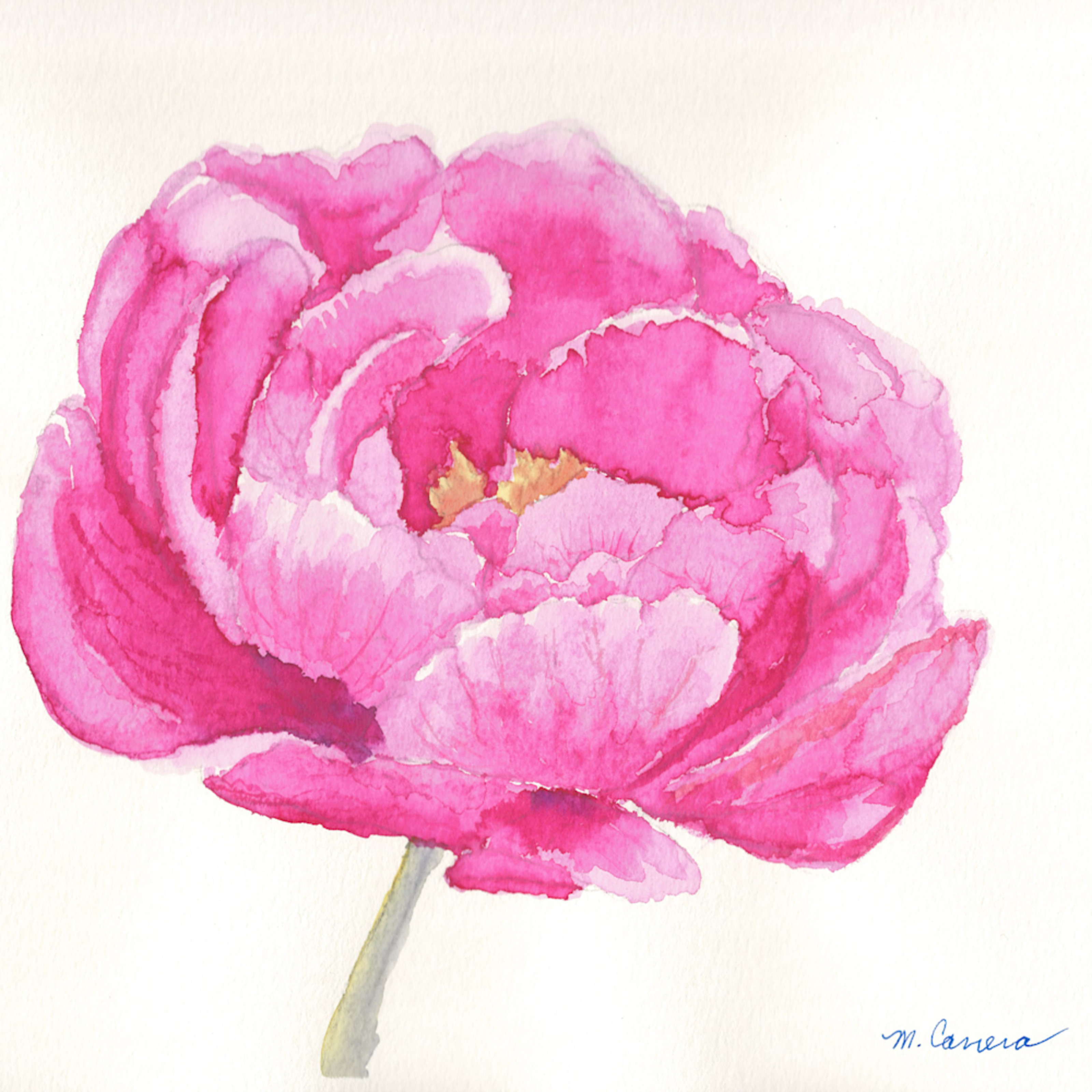 Pink peony 1 h0lym1