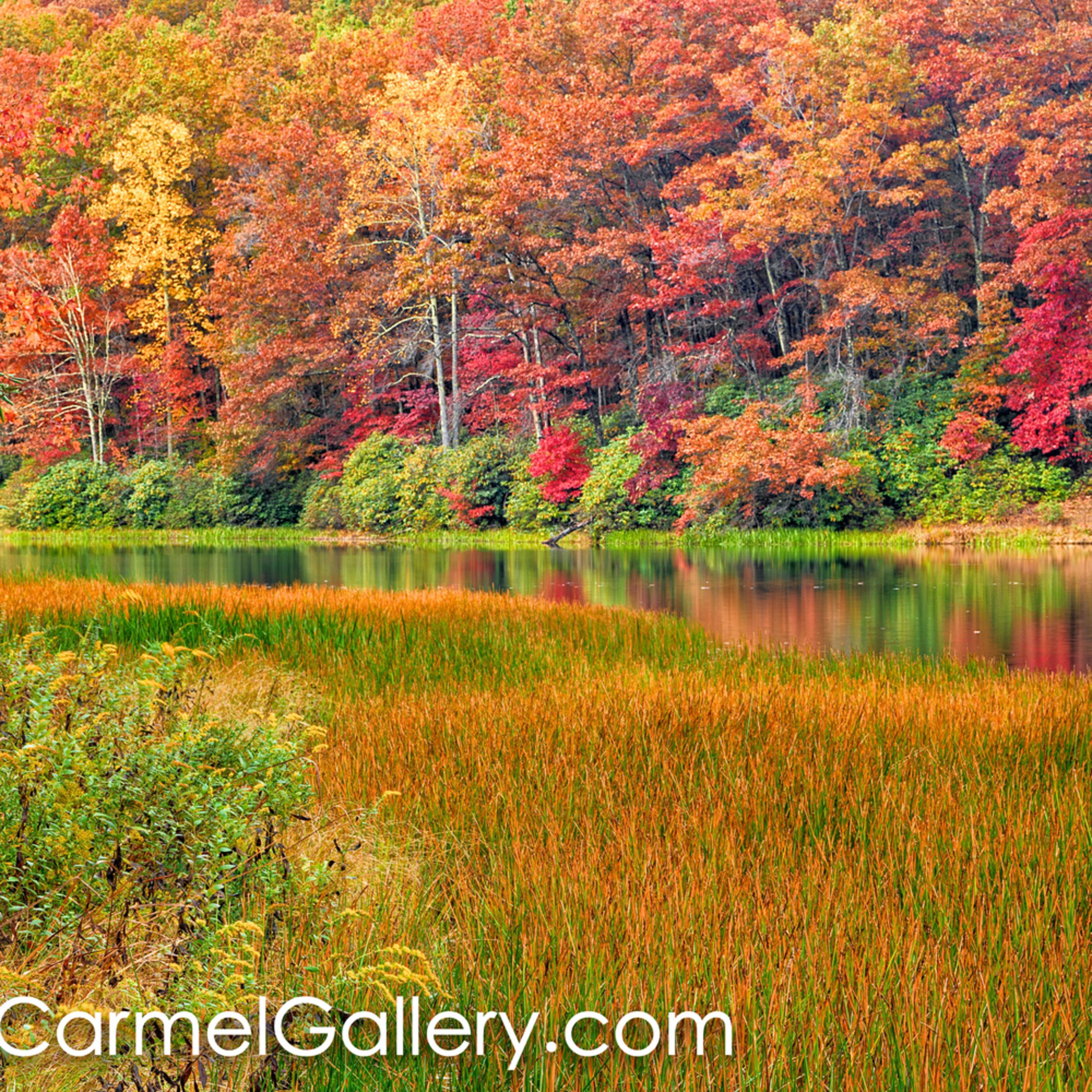 Autumn hues afu6ll